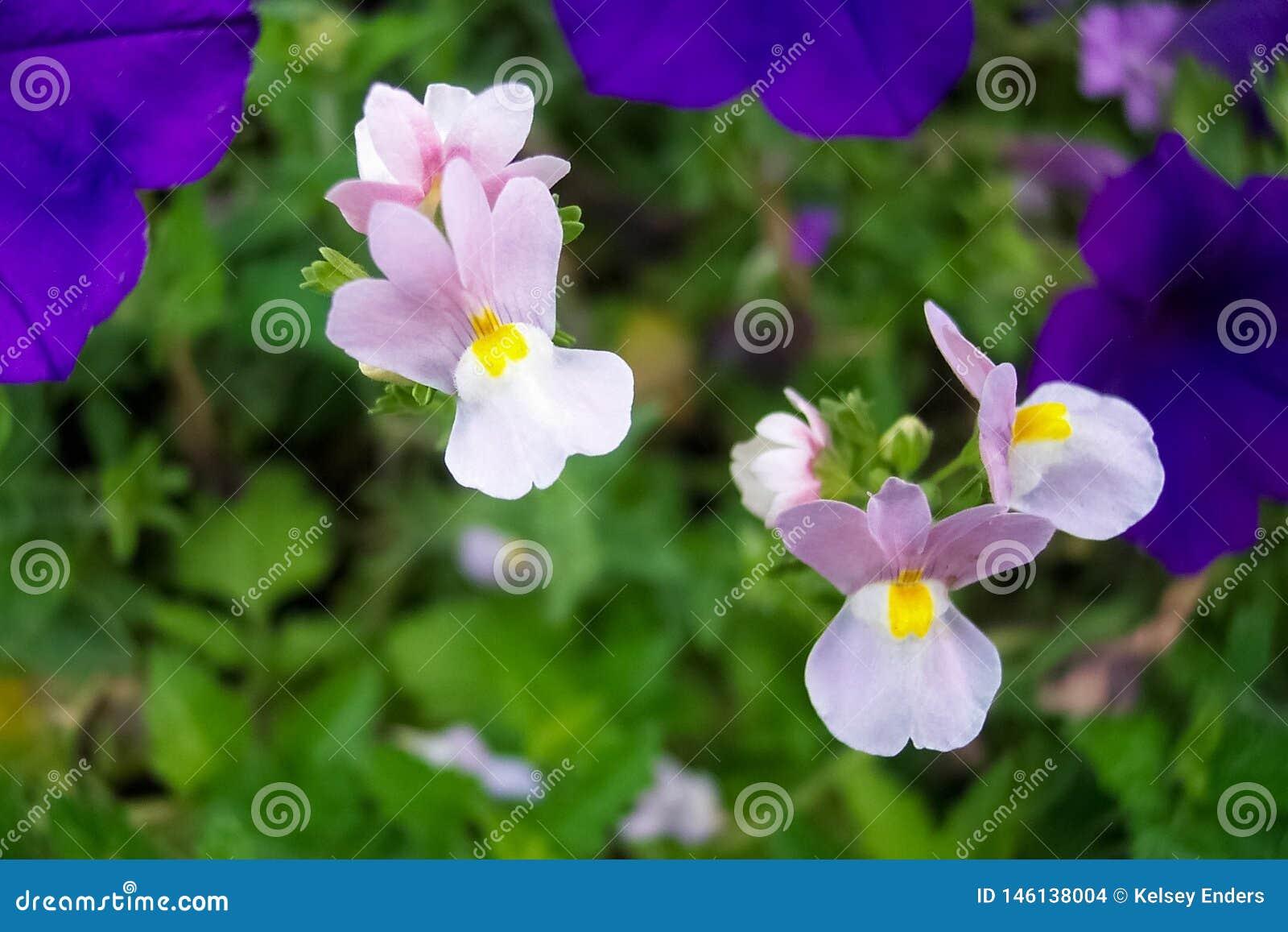 紫色短冷期龙宏观看法