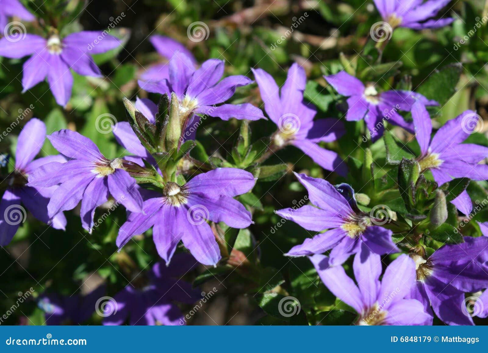 紫色美丽的花
