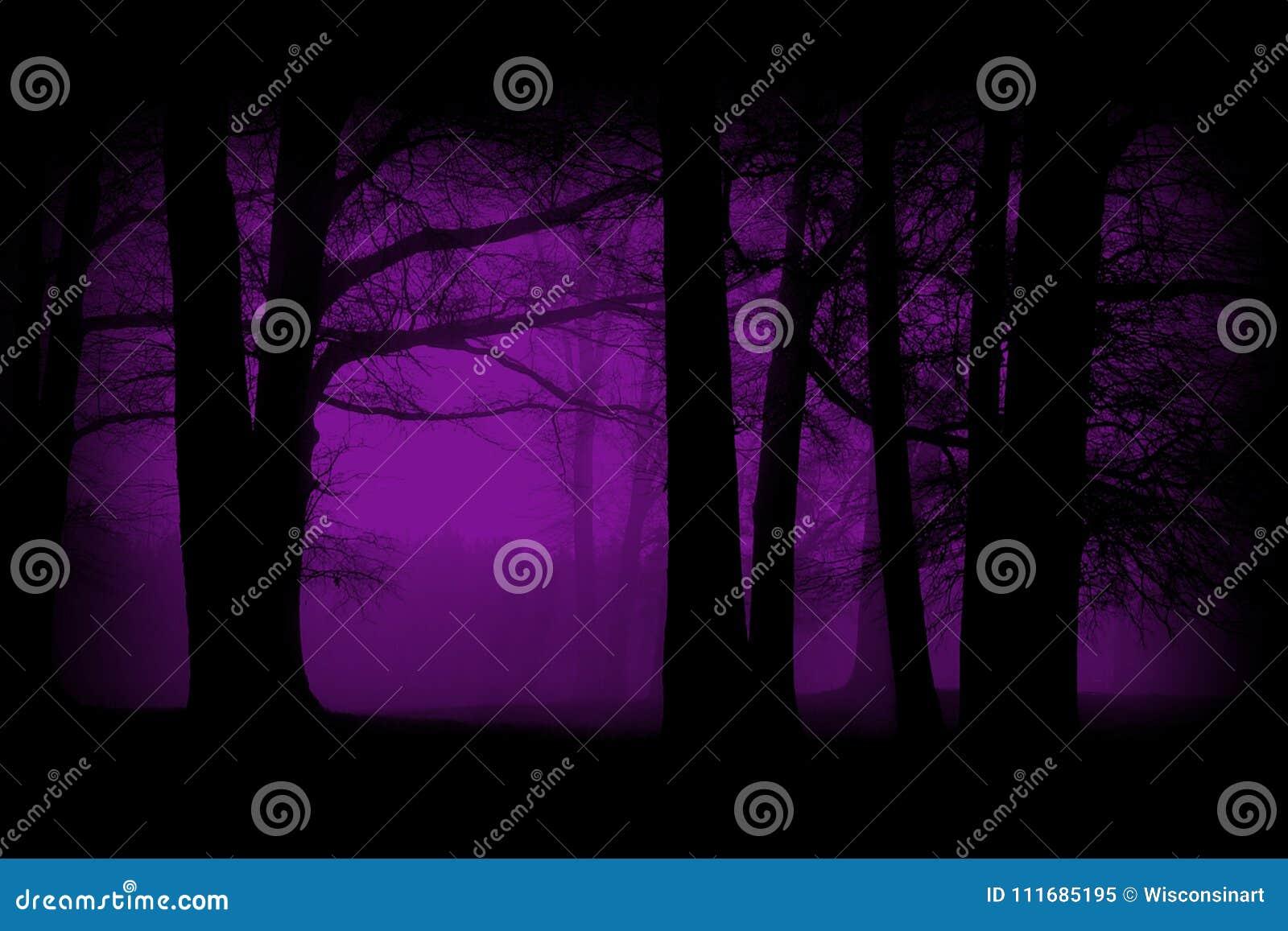 紫色,紫罗兰色森林,森林背景