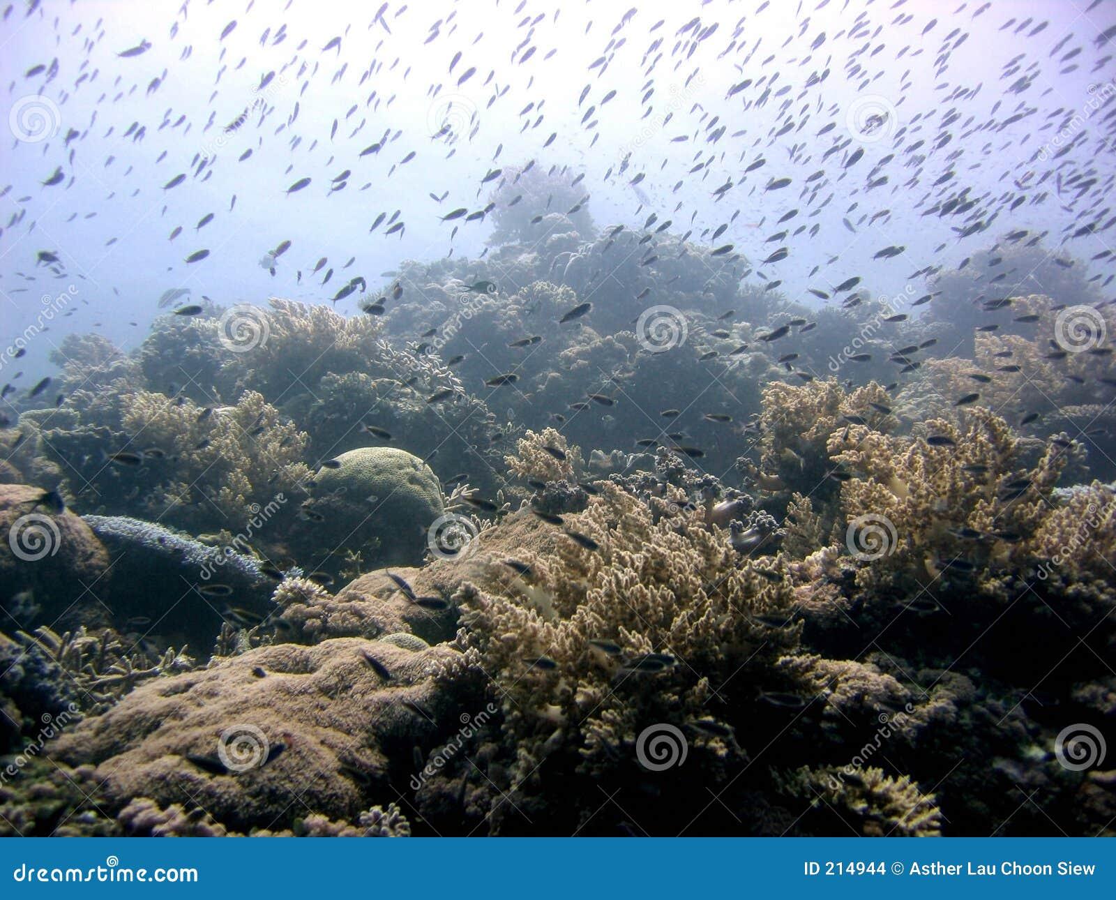 繁忙的礁石