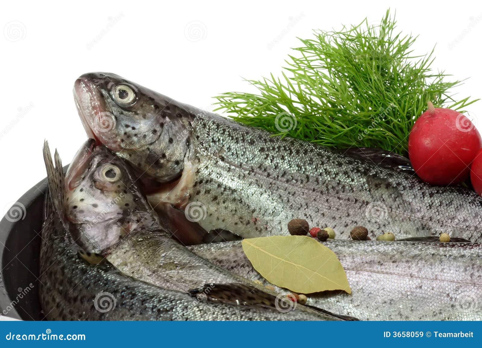 繁殖的鳟鱼