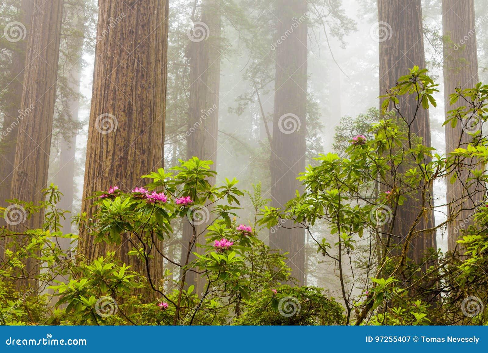 红木和杜鹃花沿诅咒小河在De落后