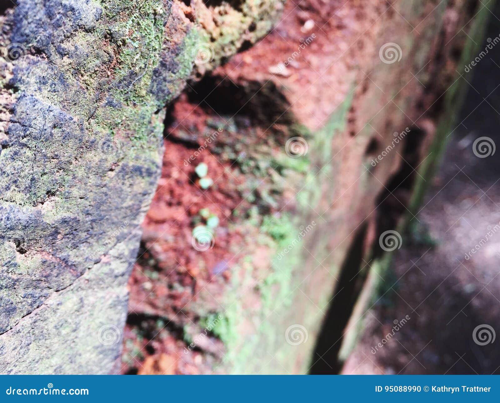 红木树细节