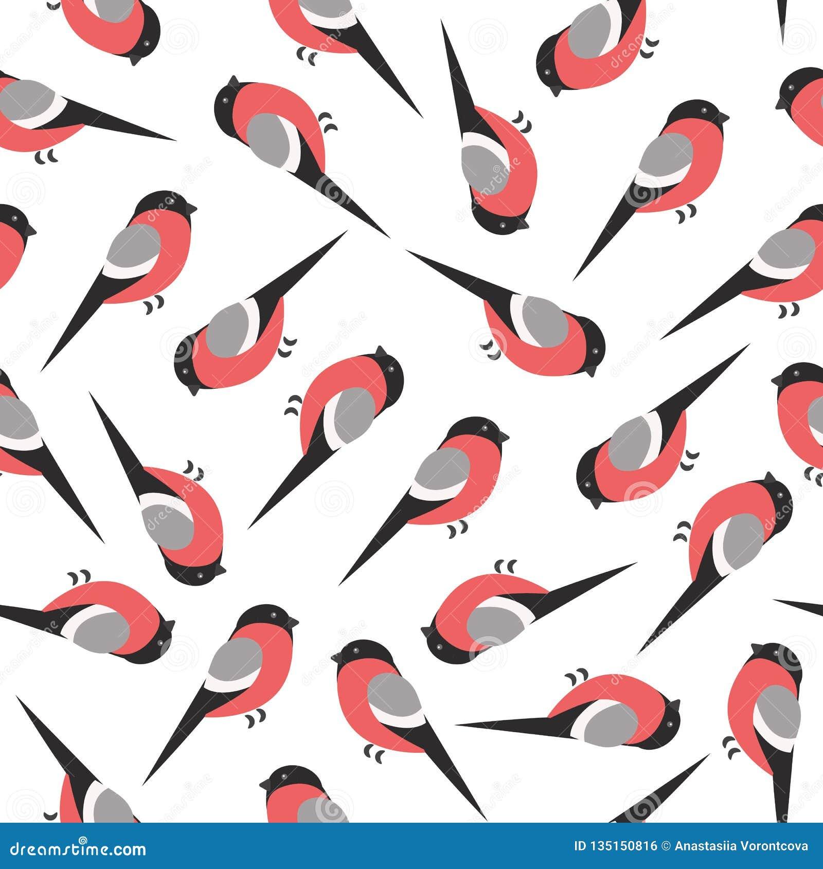 红腹灰雀在白色背景样式的冬天鸟