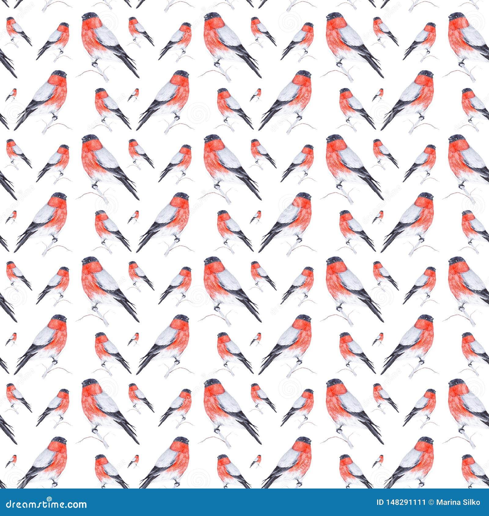 红腹灰雀鸟的水彩例证坐在白色背景隔绝的枝杈 E