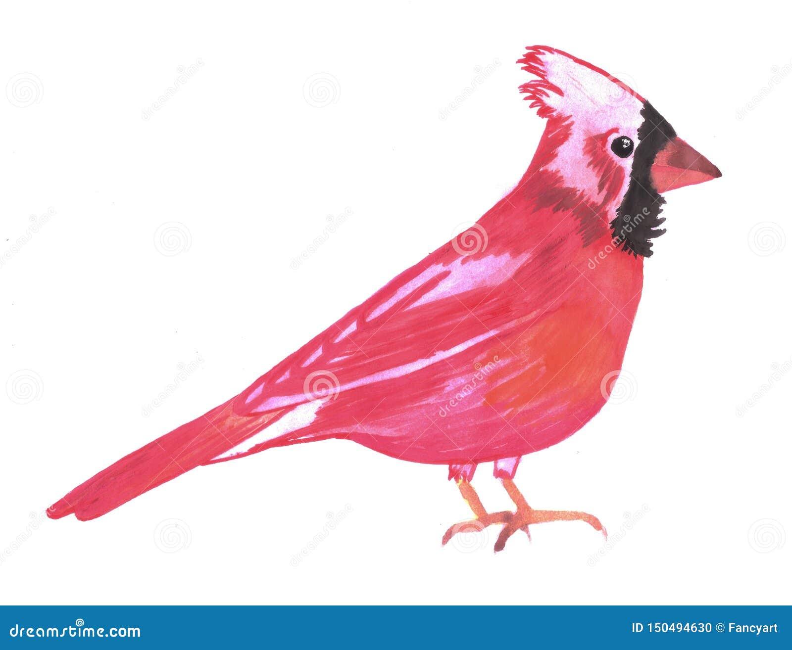 红色主要鸟水彩Cardinalis cardinalis