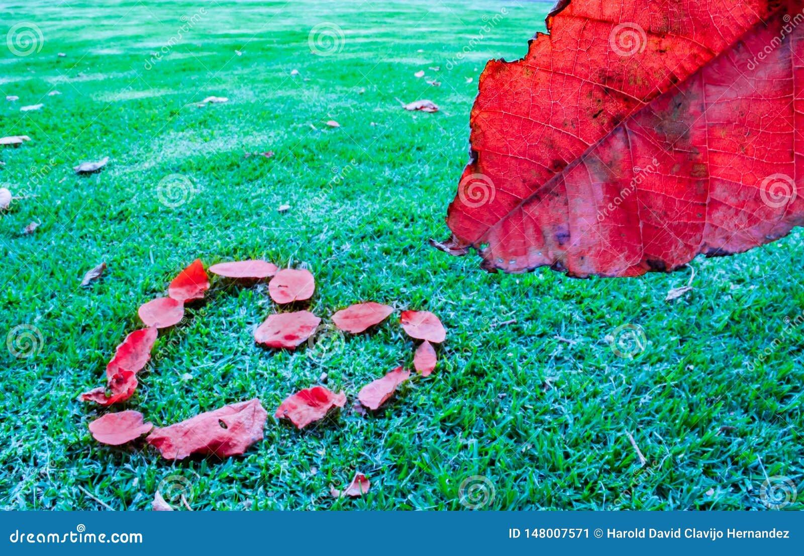 红色叶子和心脏