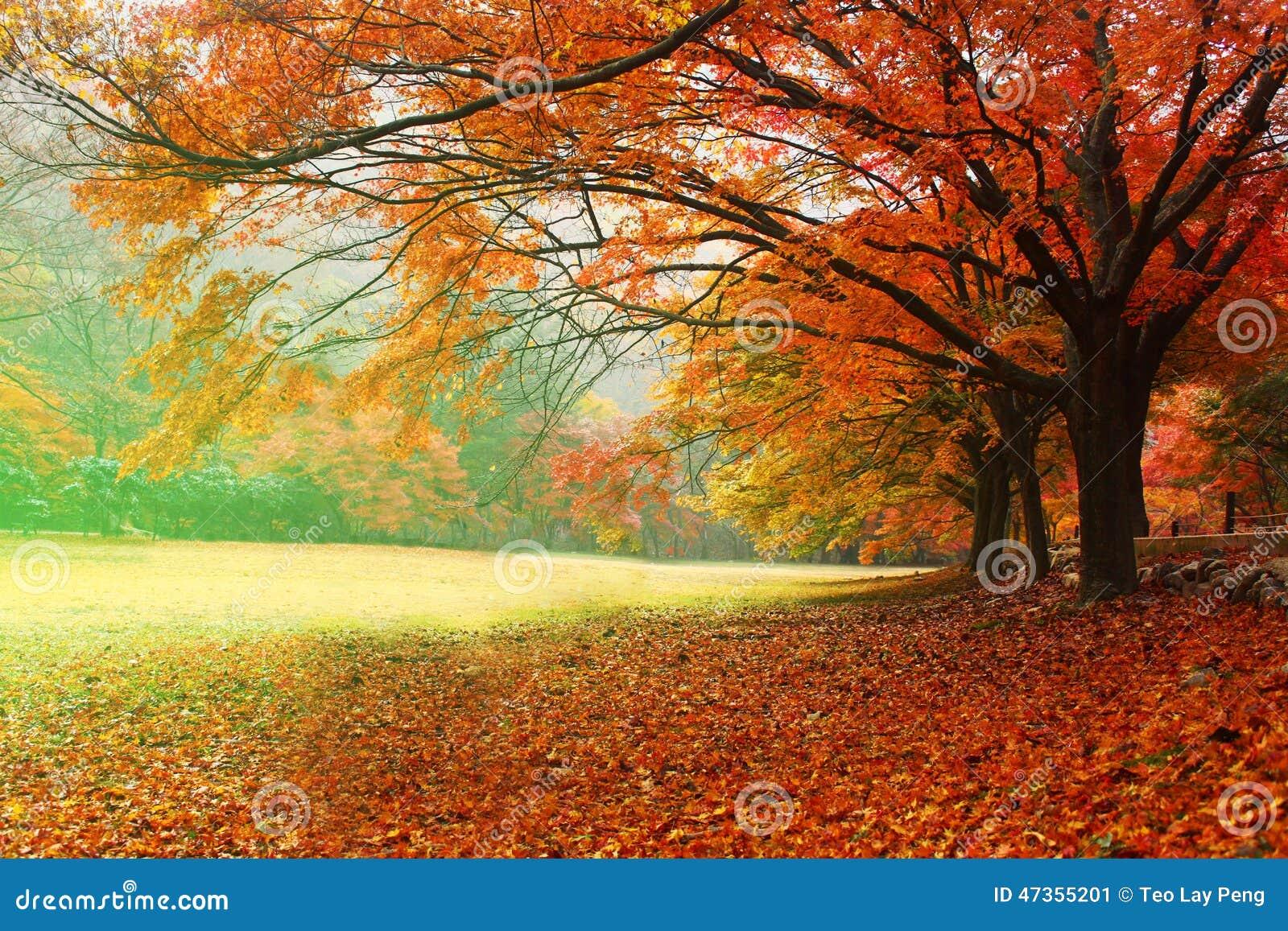 红色叶子季节
