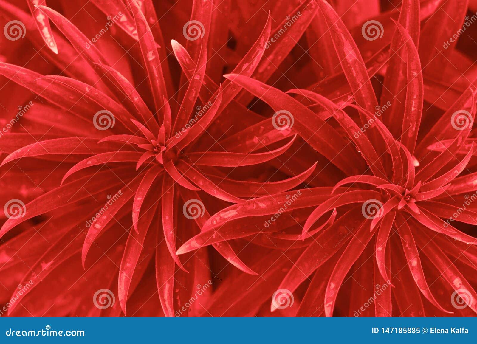 红色叶子背景
