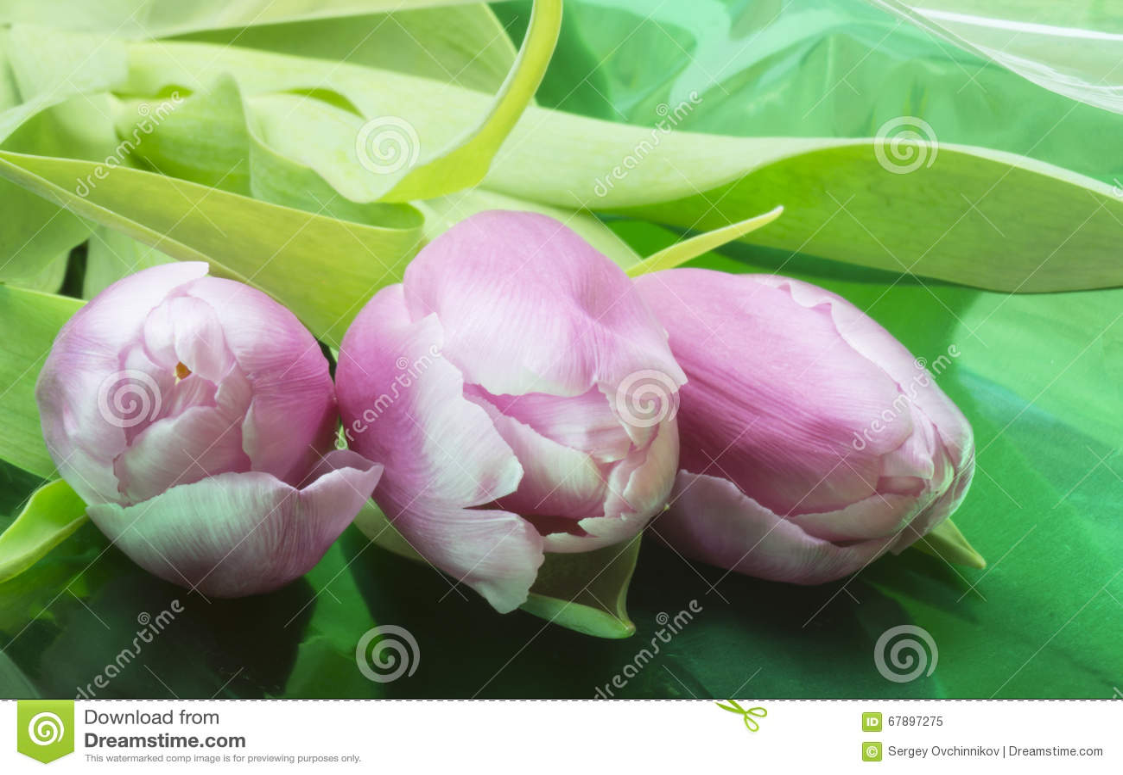 从红色和白色郁金香的花束