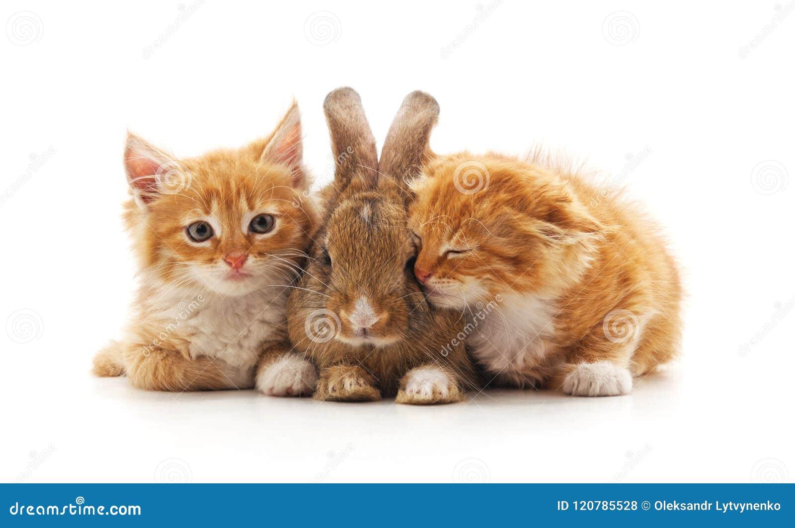 红色小猫和兔宝宝
