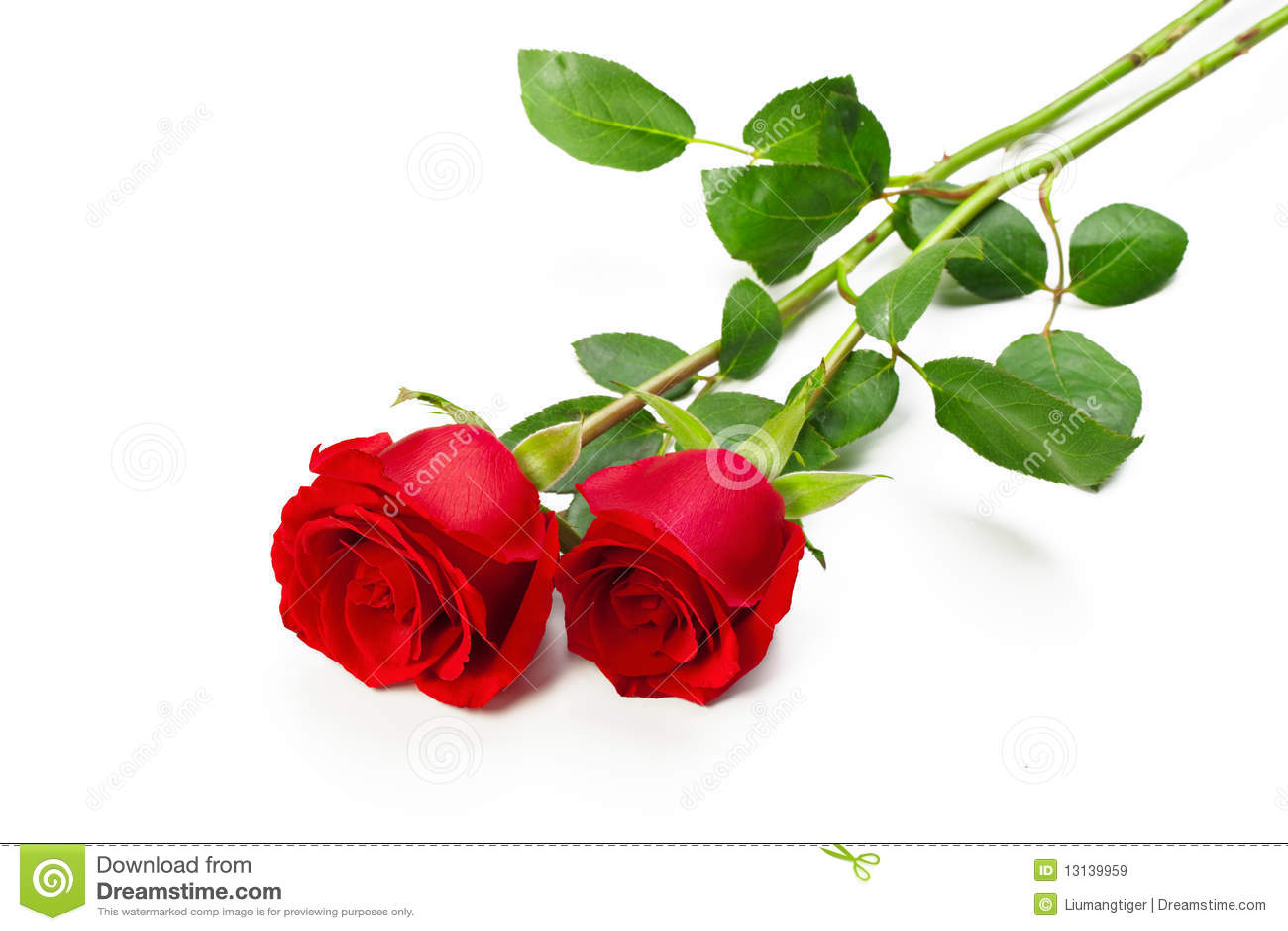红色玫瑰二