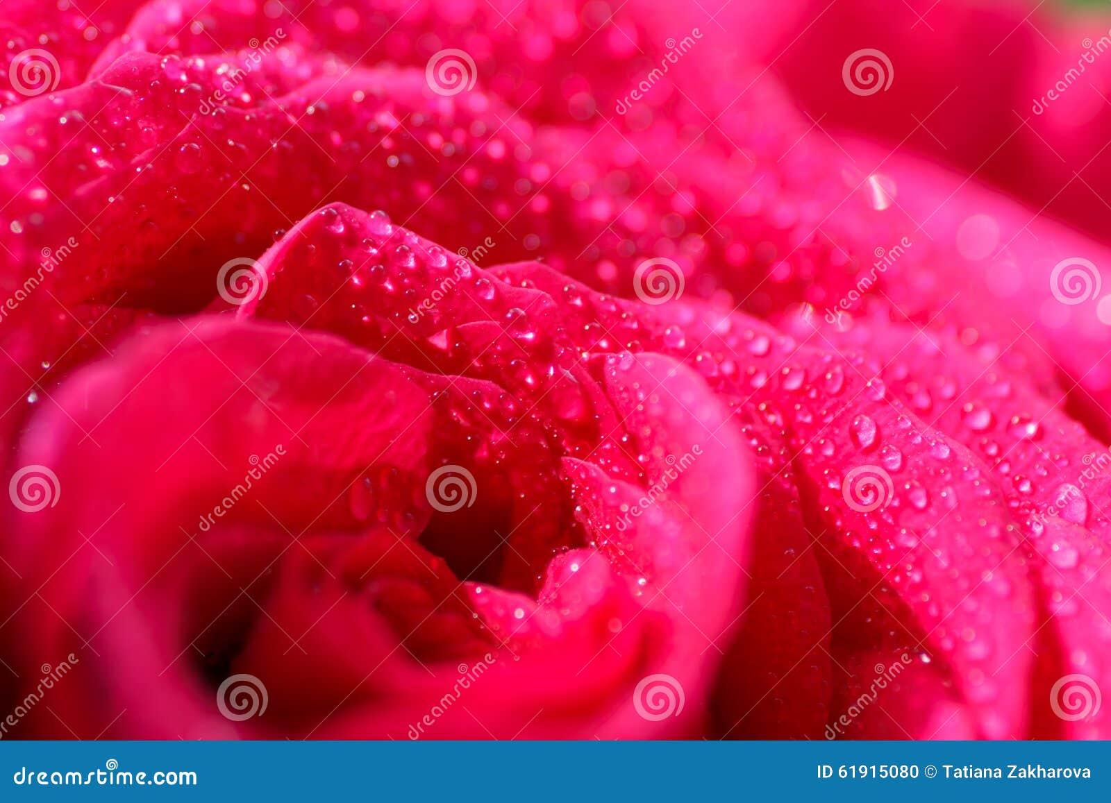 绯红色玫瑰欢乐花束 库存照片 - 图片: 61915080