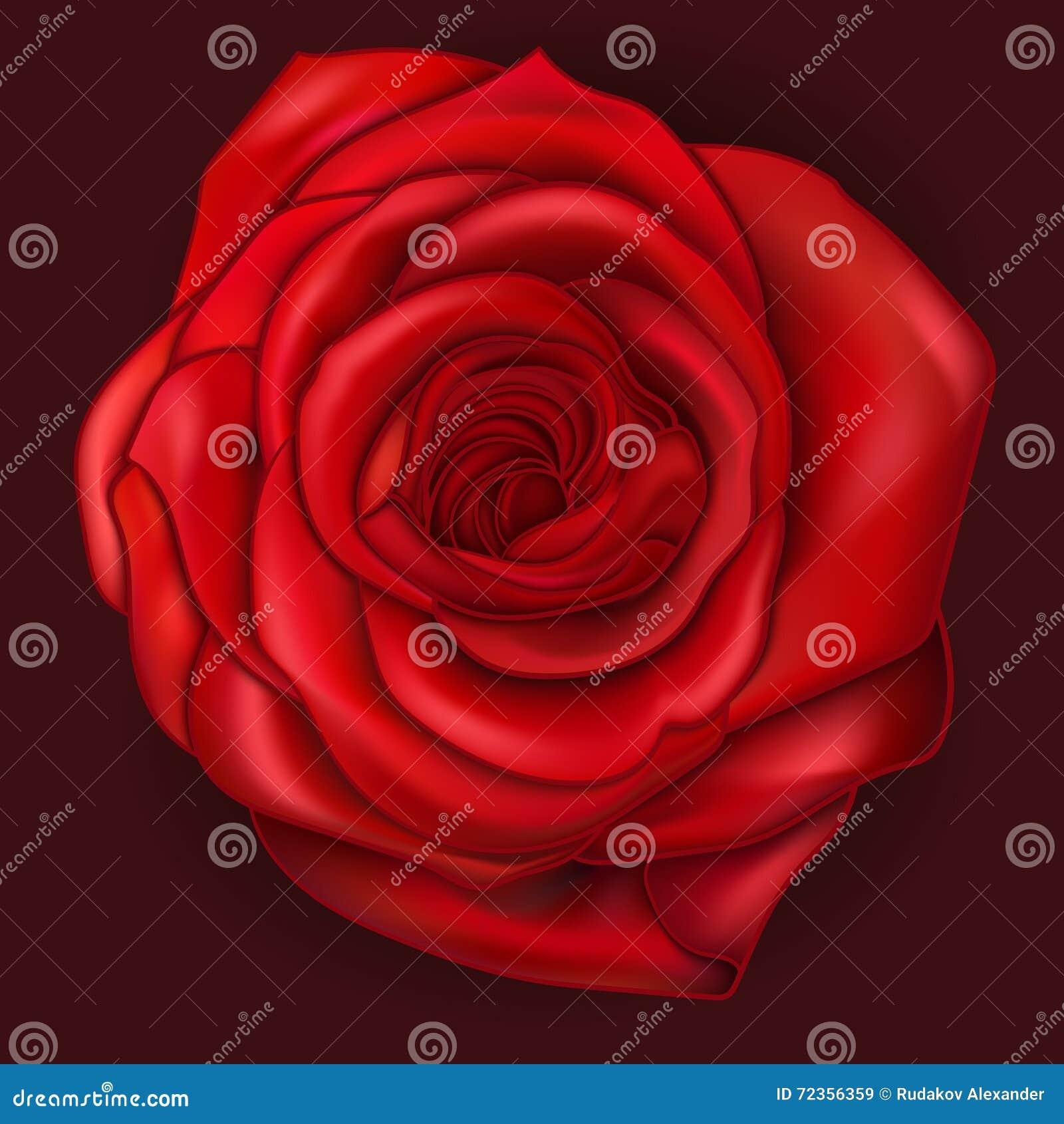 红色玫瑰色向量