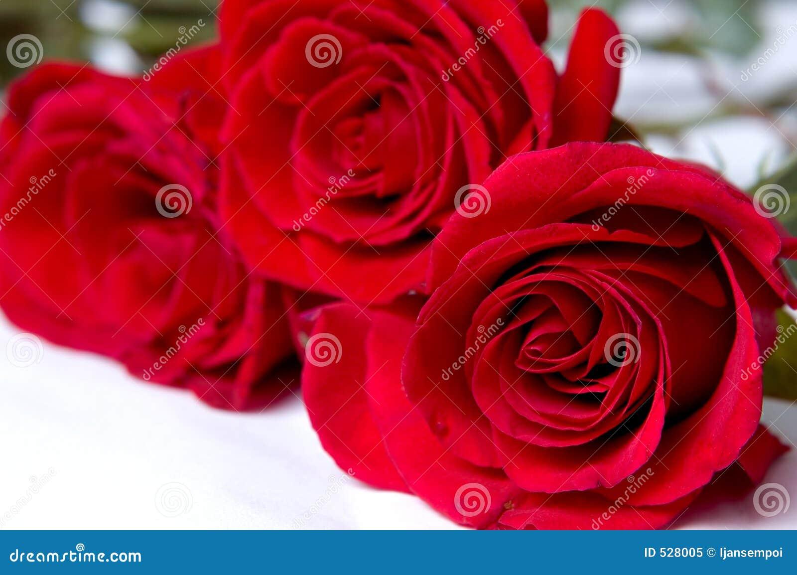 Download 红色玫瑰 库存图片. 图片 包括有 特殊, 关系, 降低, 锋利, 感觉, 言情, 卖花人, 关闭, 绿色, 婚姻 - 528005