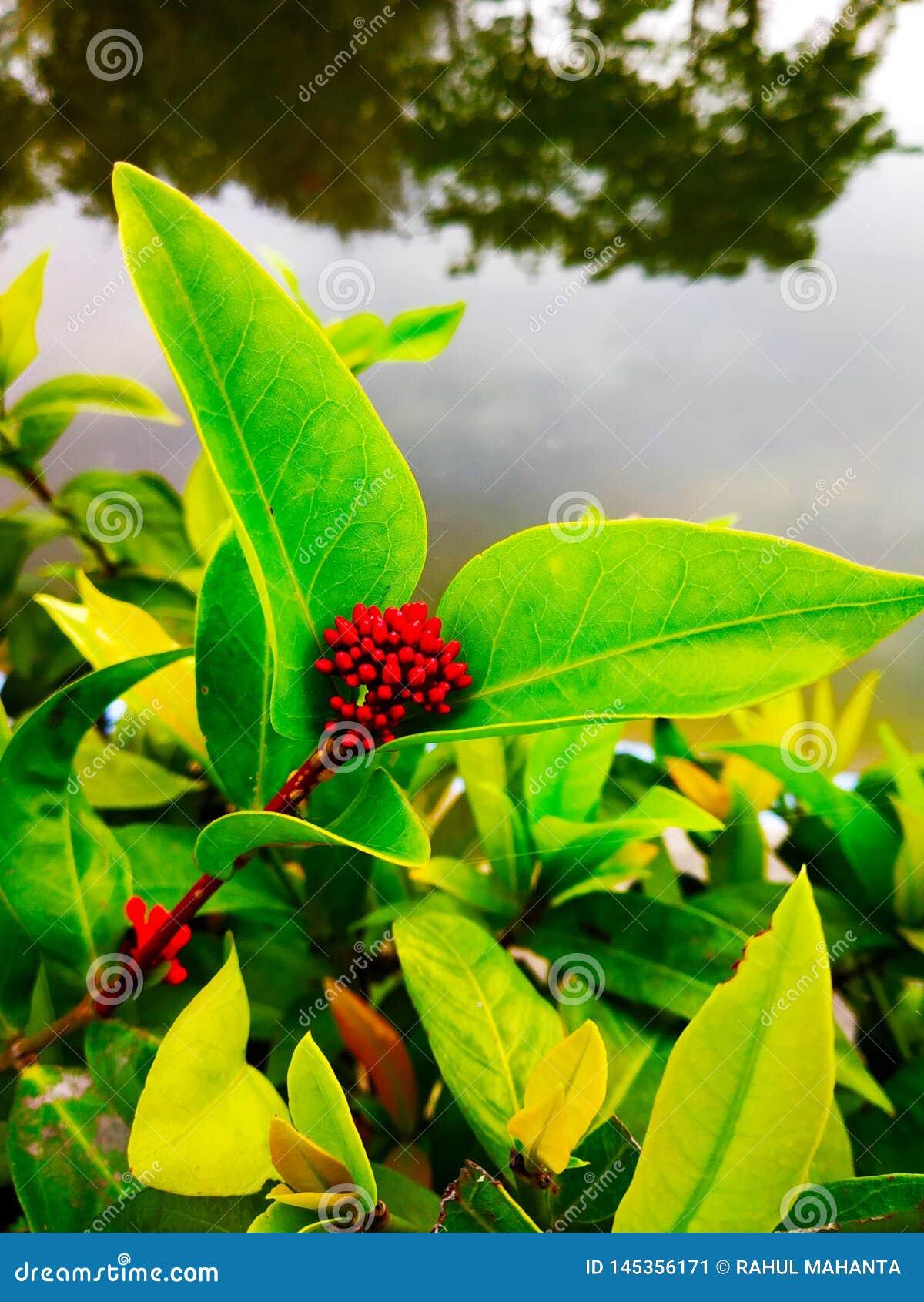 红色生长花
