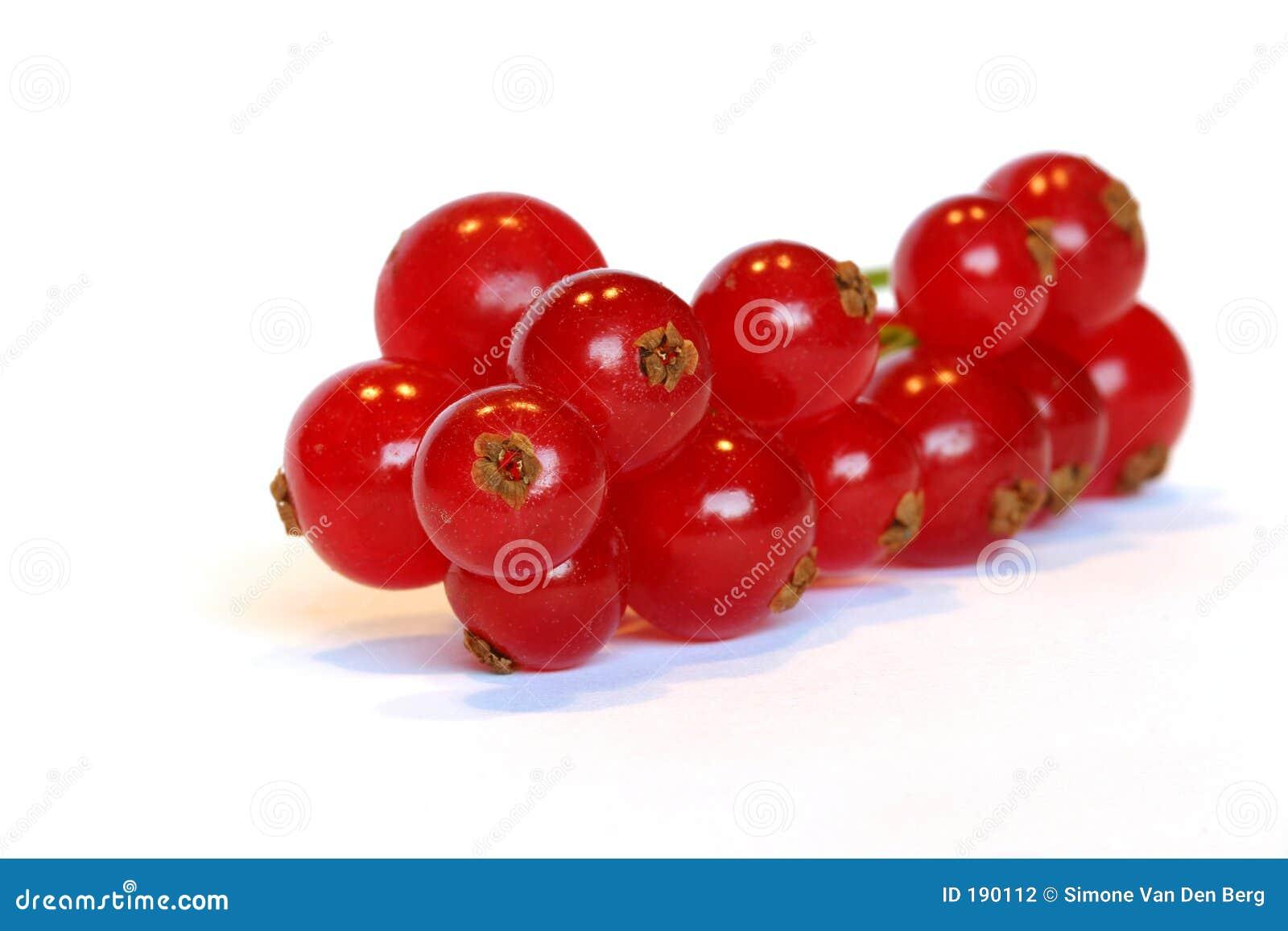 红色的浆果