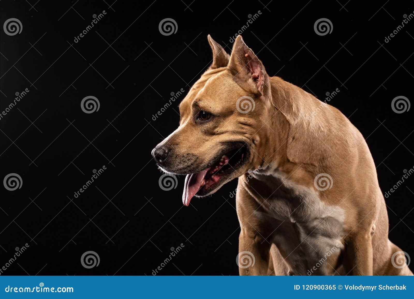小色狗和猫交配_browne, 妖, 似犬, 猫, 椅子, 五颜六色, 逗人喜爱, 危险, 狗, 国内