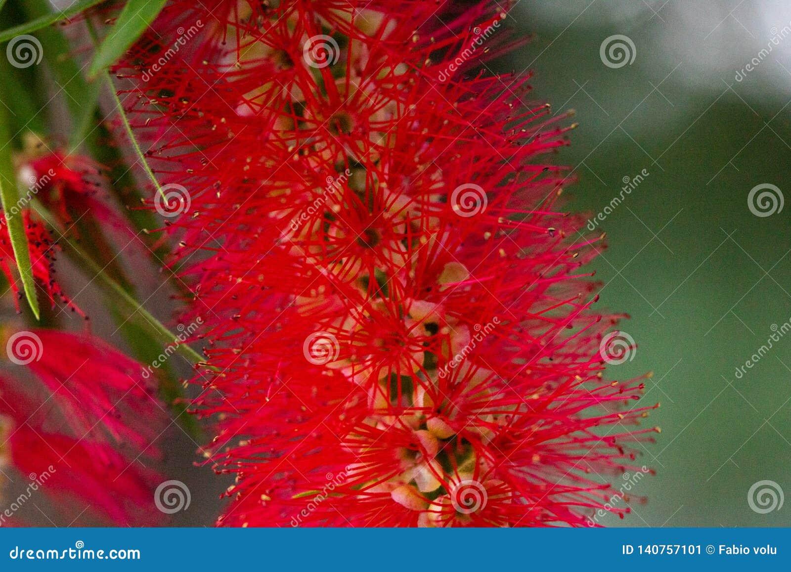 红色花特写镜头在庭院的