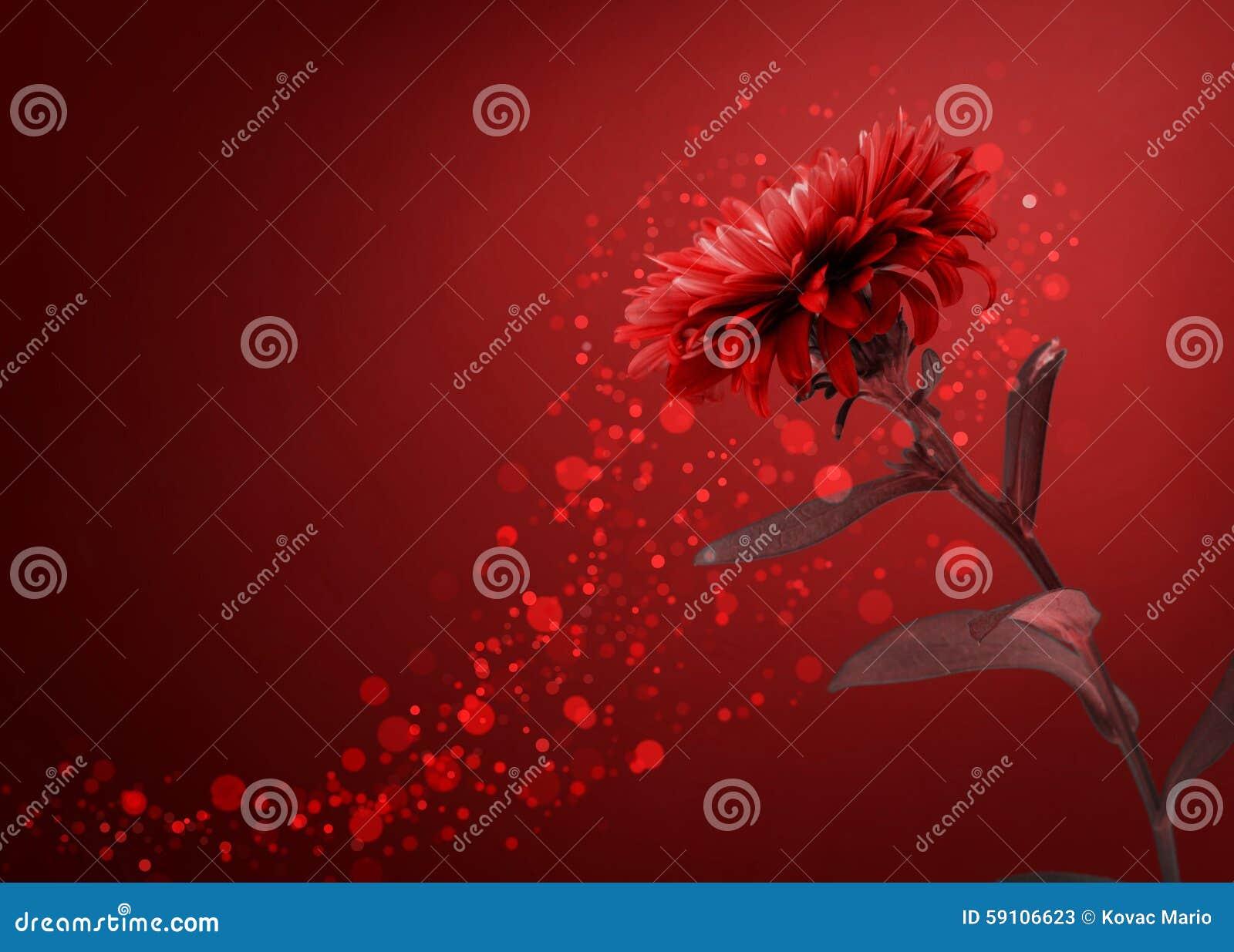 红色花背景