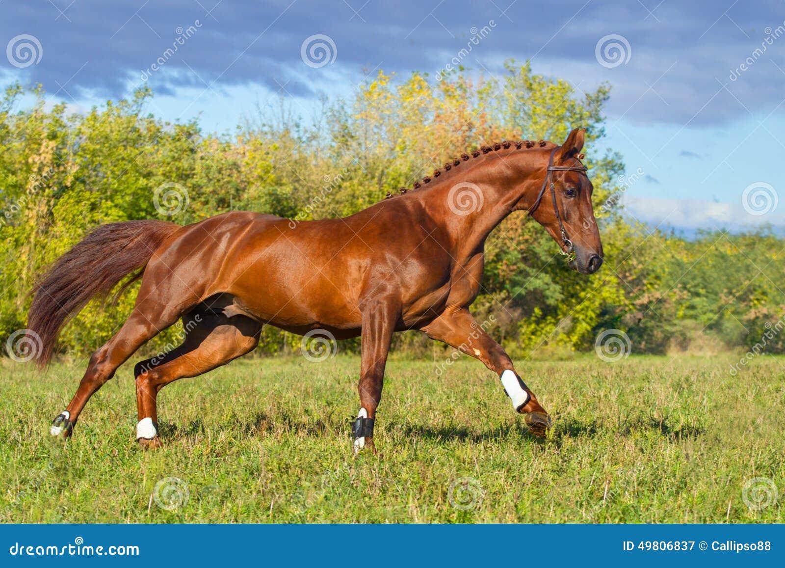 库存照片: 红色马疾驰图片