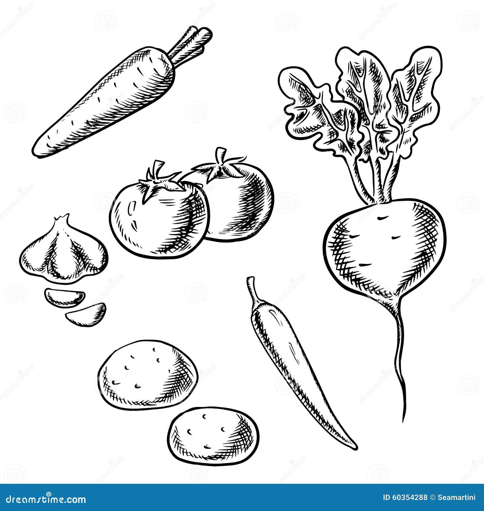 新鲜的健康红萝卜,蕃茄,甜菜,土豆,辣椒和在白色背景隔绝的大蒜菜图片