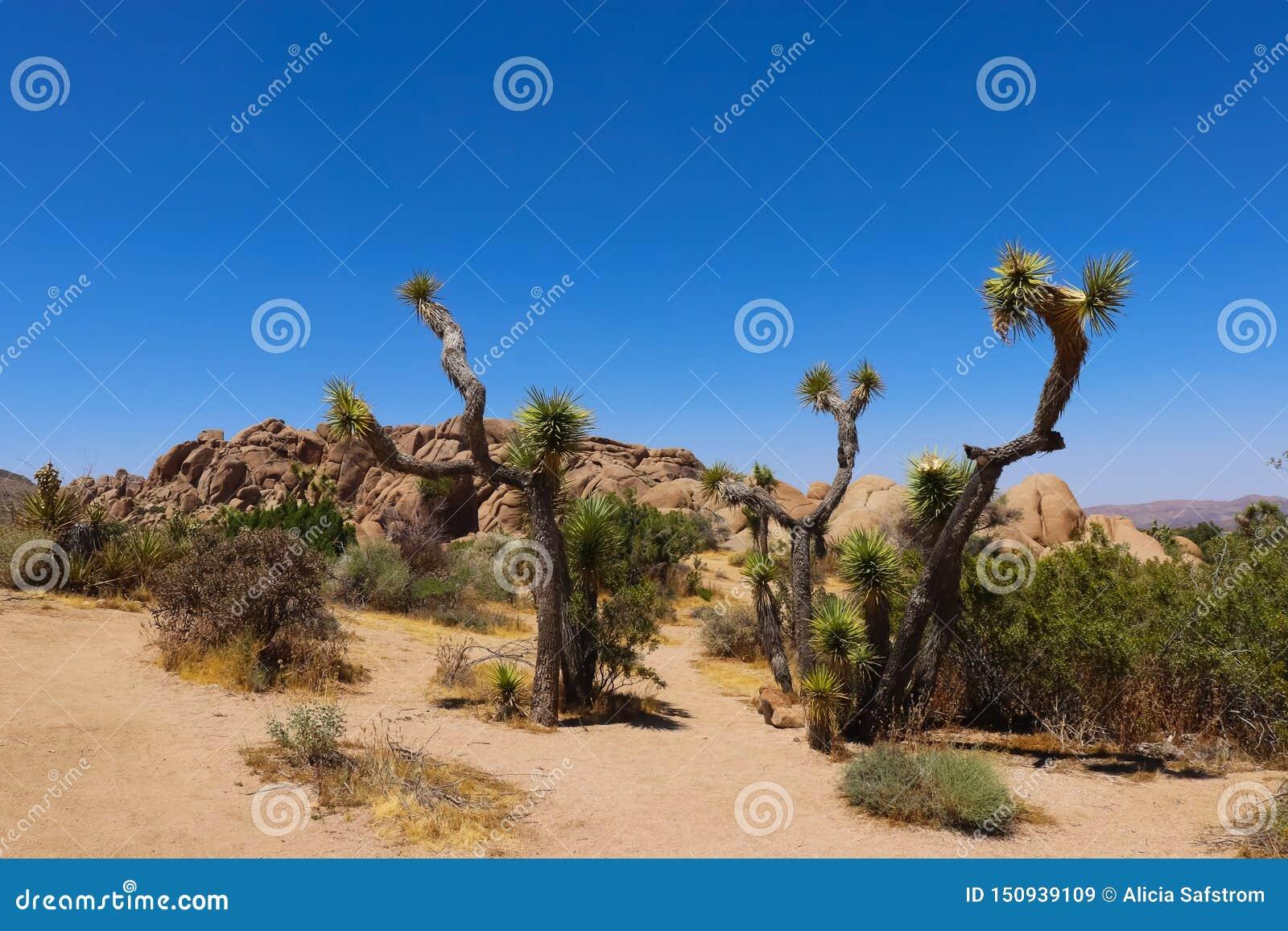 约书亚树国家公园,莫哈韦沙漠