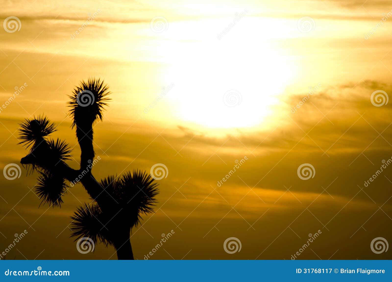约书亚树日落