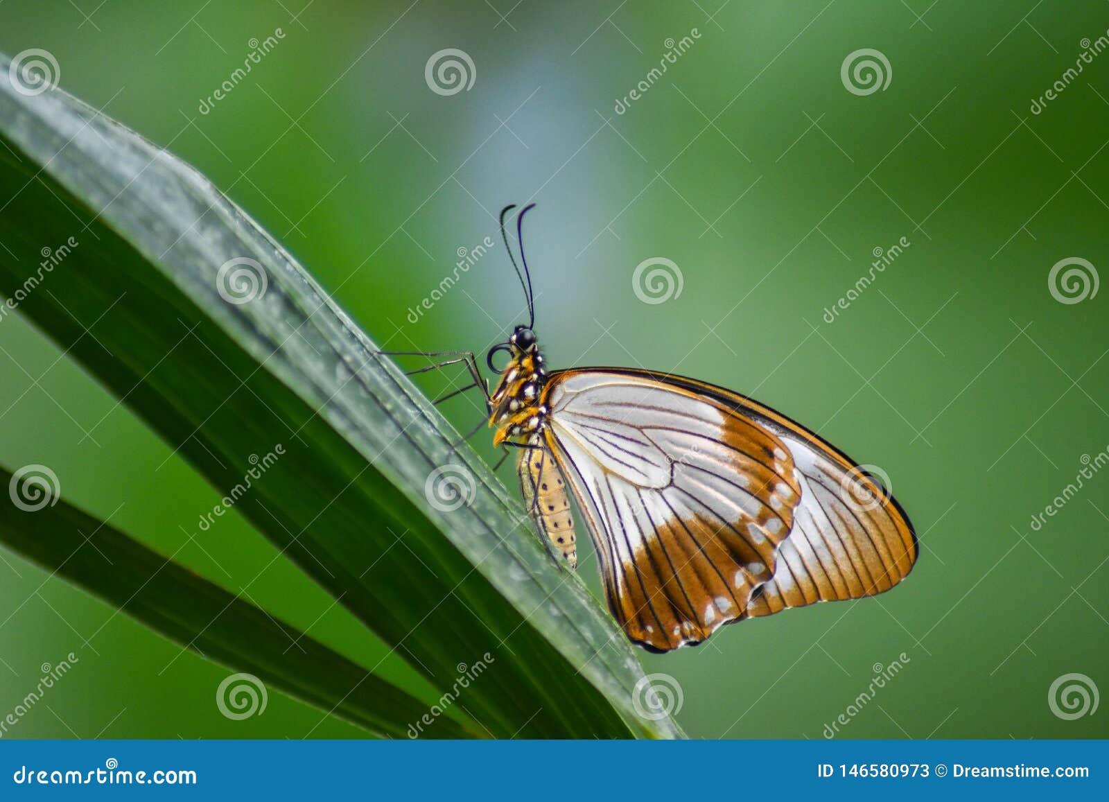 纯净和典雅的蝴蝶