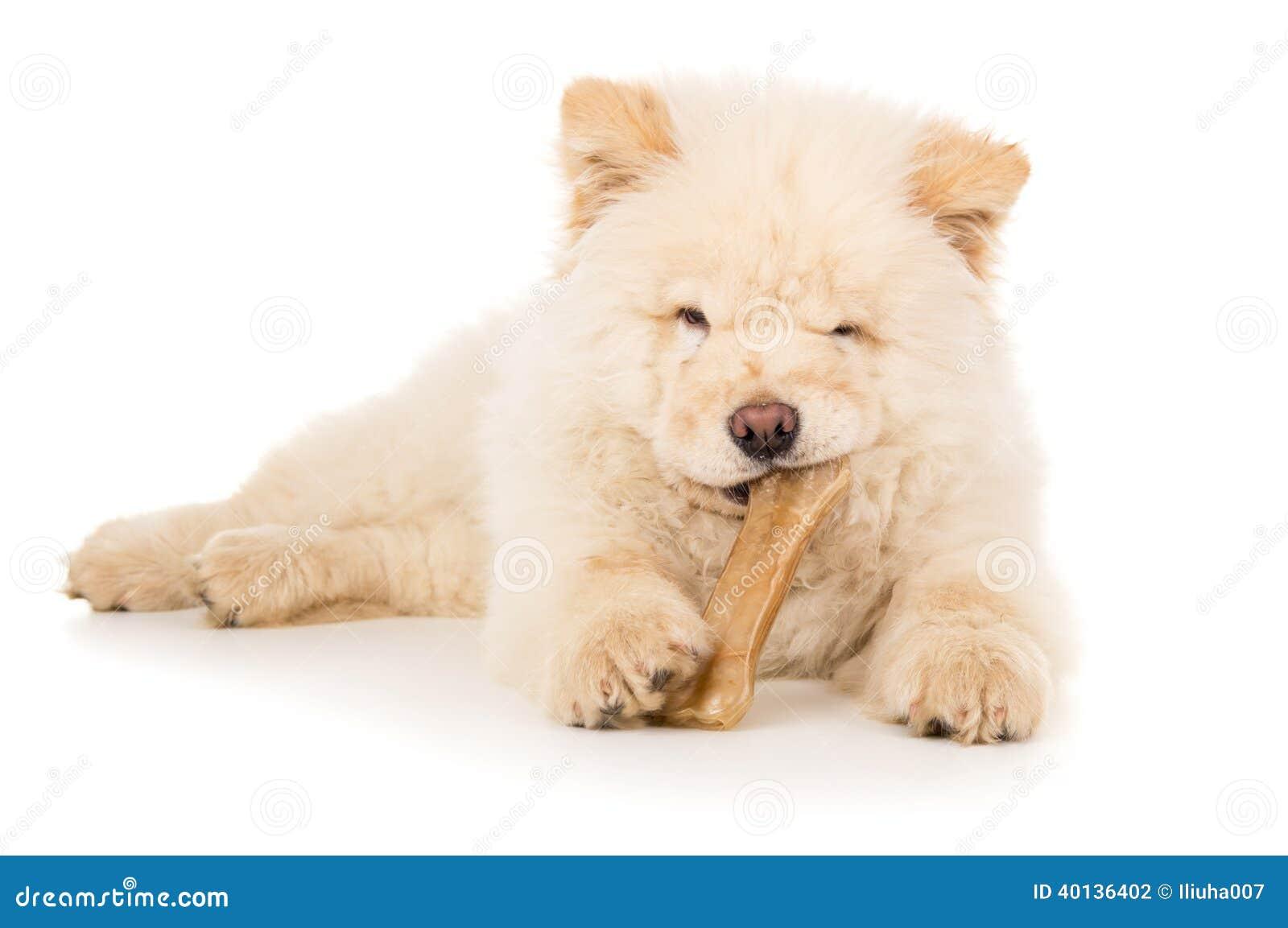 狗,吃骨头的小狗.