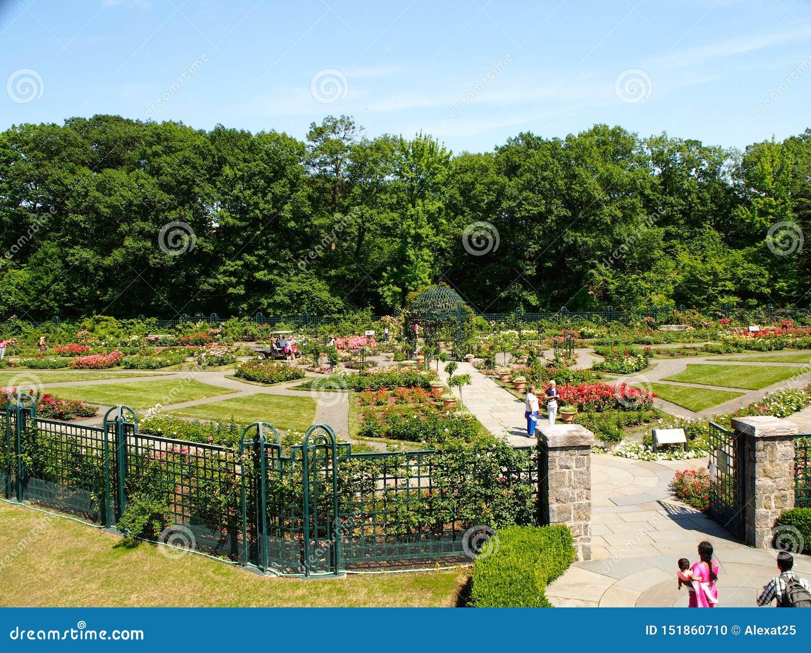 纽约-美国,佩吉纽约植物园的洛克菲勒玫瑰花园竞技场在布朗克斯在纽约