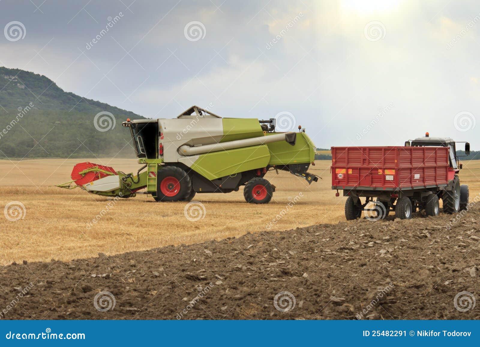 组合-被收获的麦子