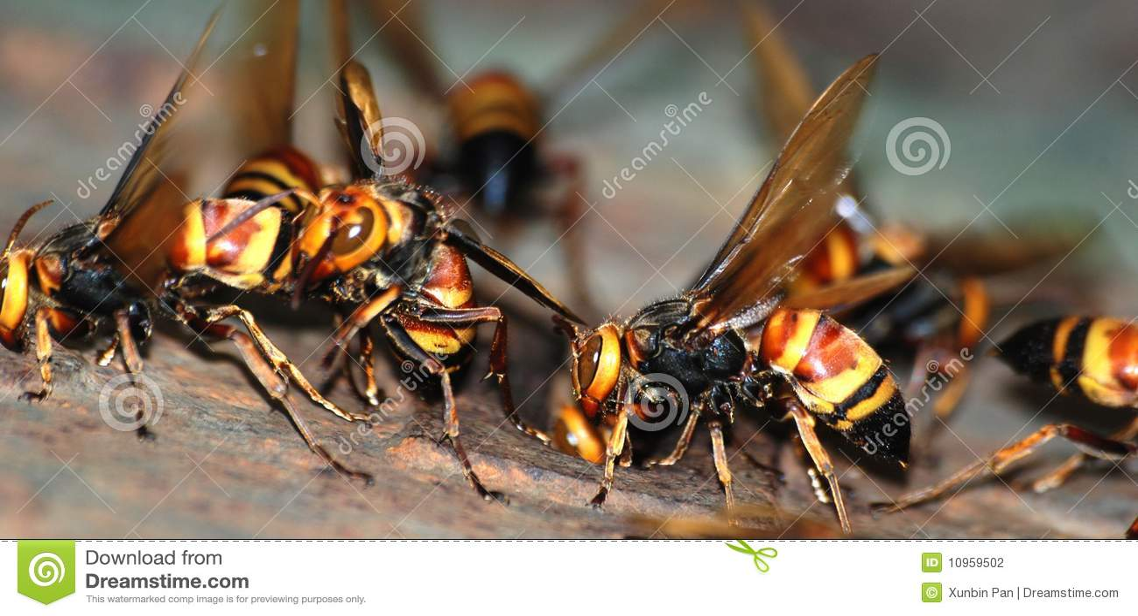 组宏指令黄蜂
