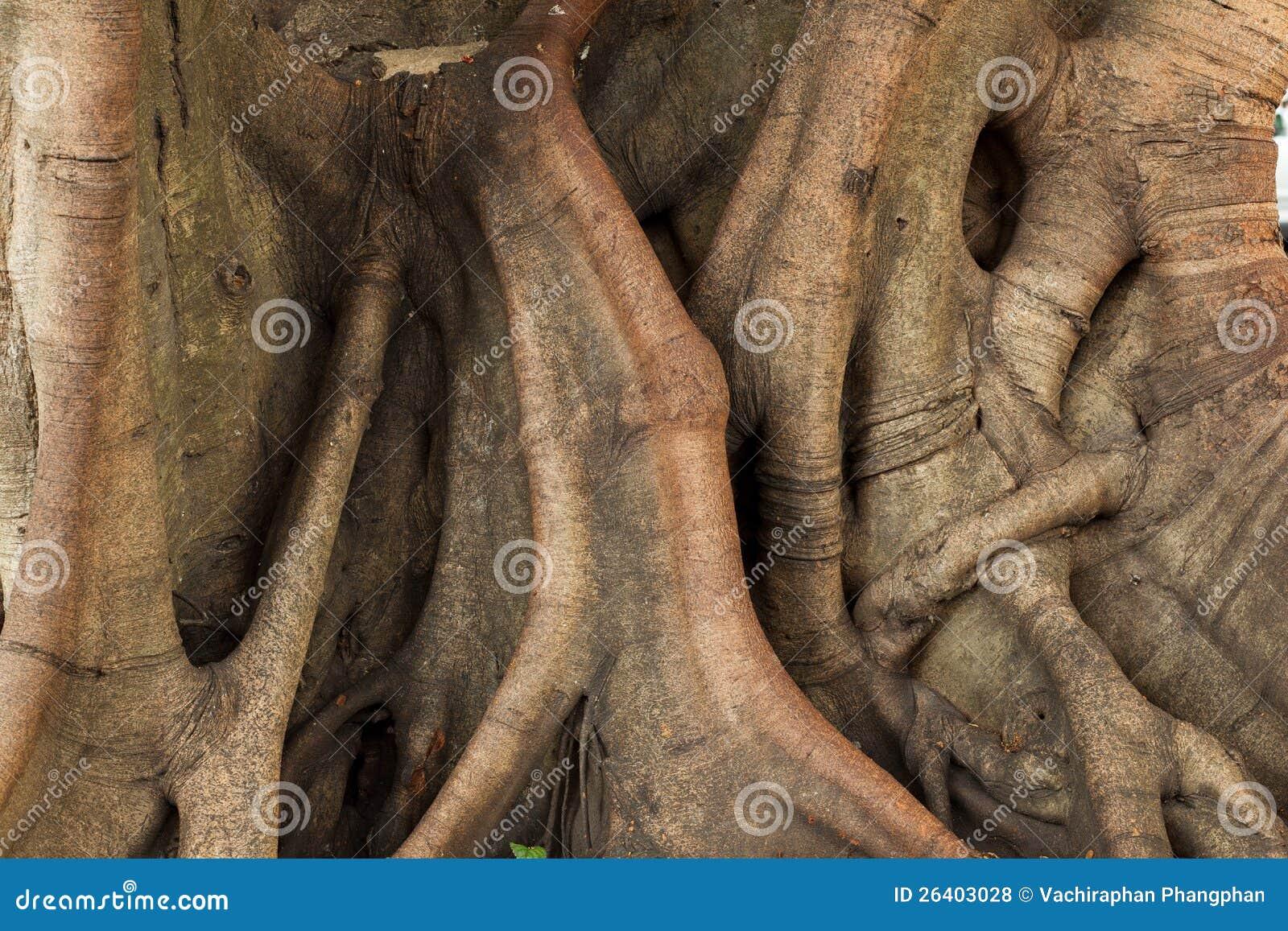 结构树的树干。