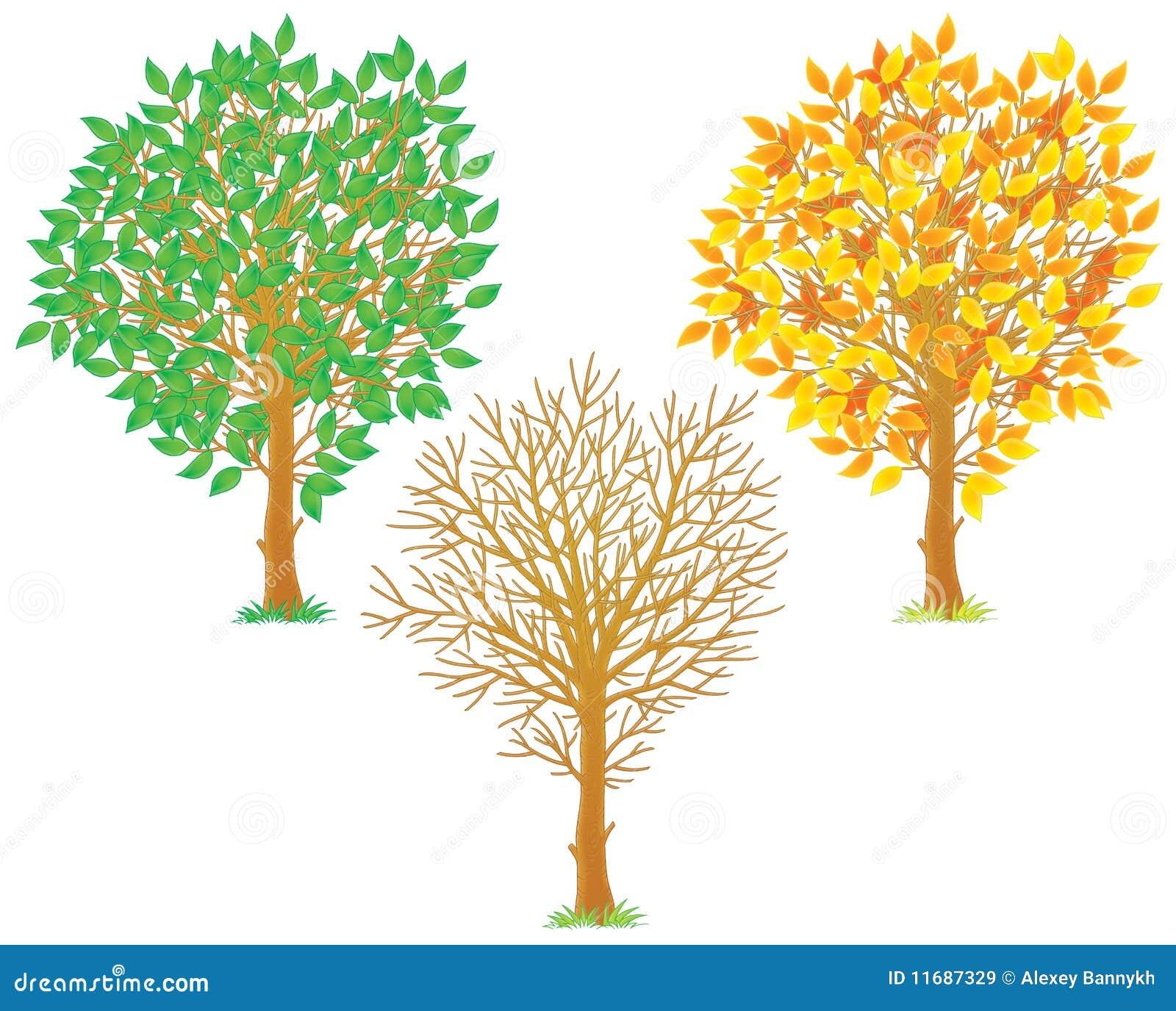 艺术秋天夹子叶子绿色查出叶子夏天结构树冬天黄色.图片