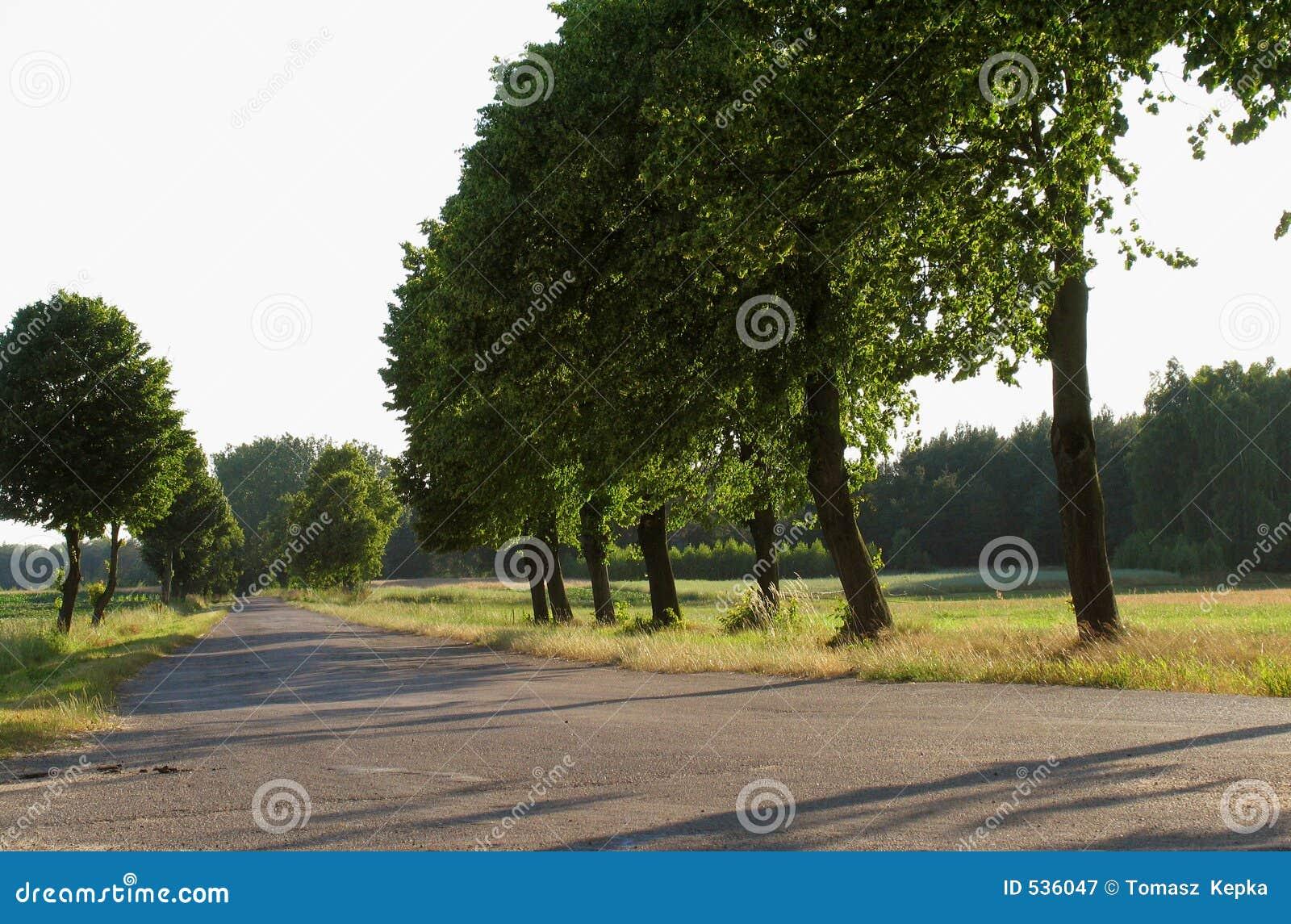 Download 结构树 库存图片. 图片 包括有 夏天, 阳光, 结构树, 本质, 横向, 波兰 - 536047