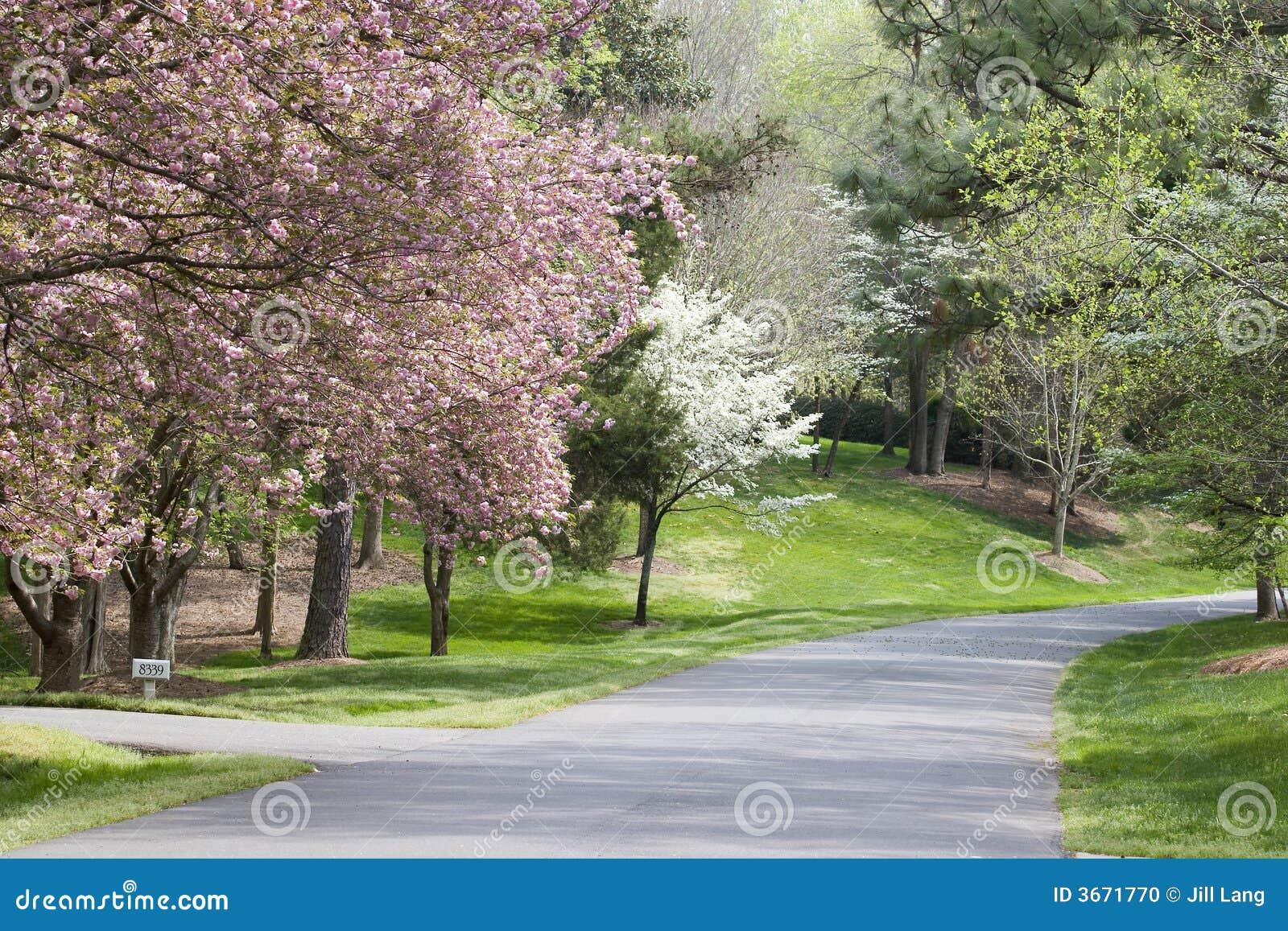 绽放春天结构树