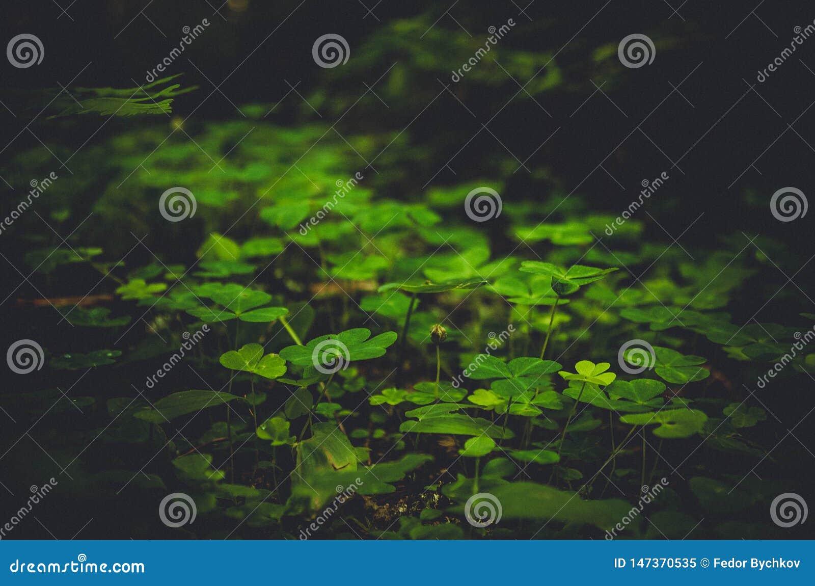绿色下木的黑暗的图象