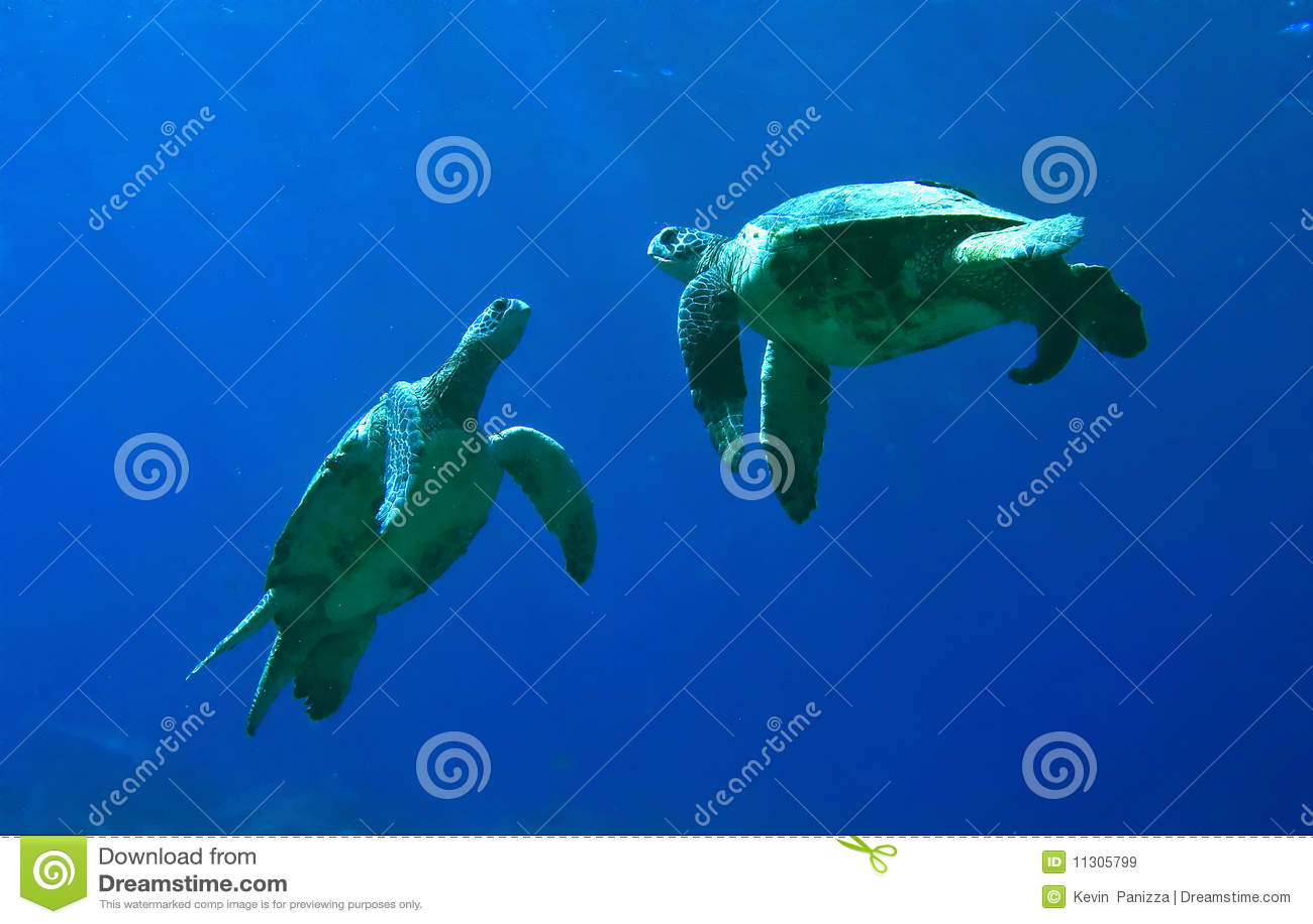 绿色使用的海龟