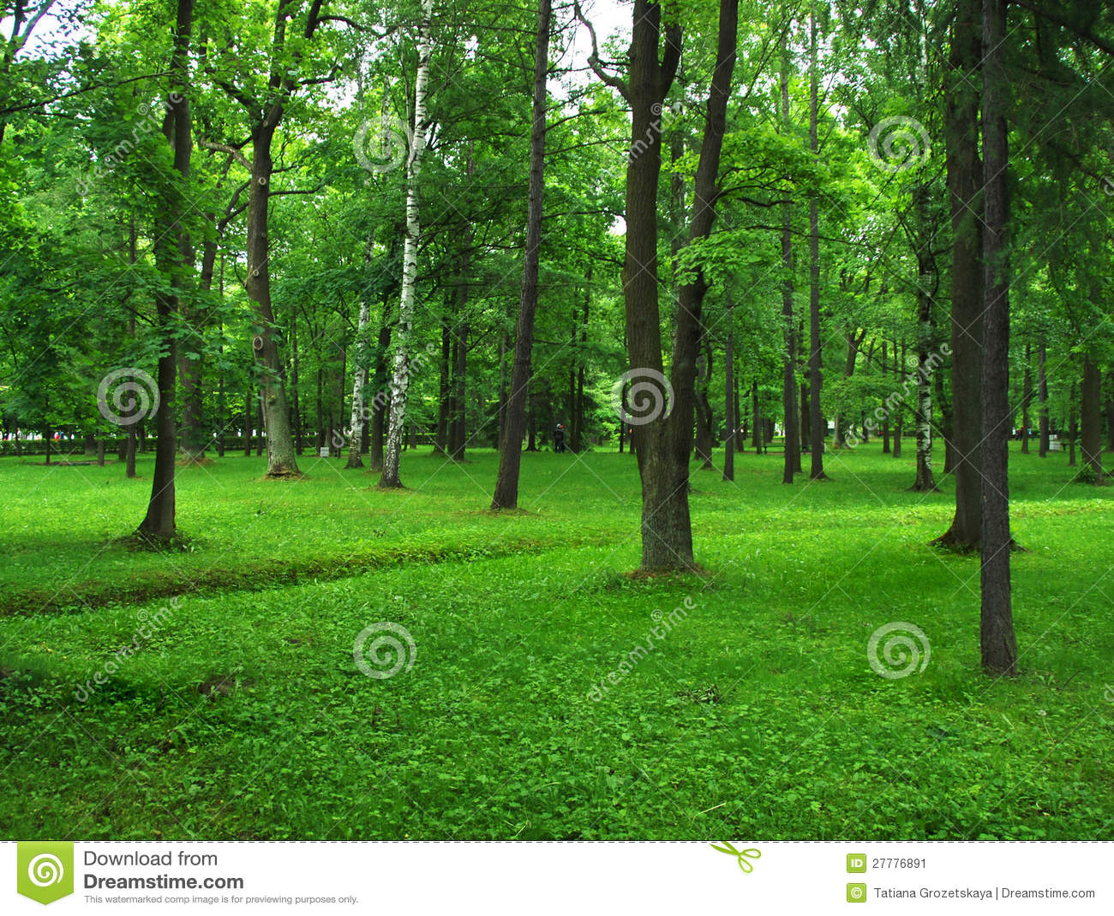 绿色公园,夏天森林,草草甸和结构树.图片
