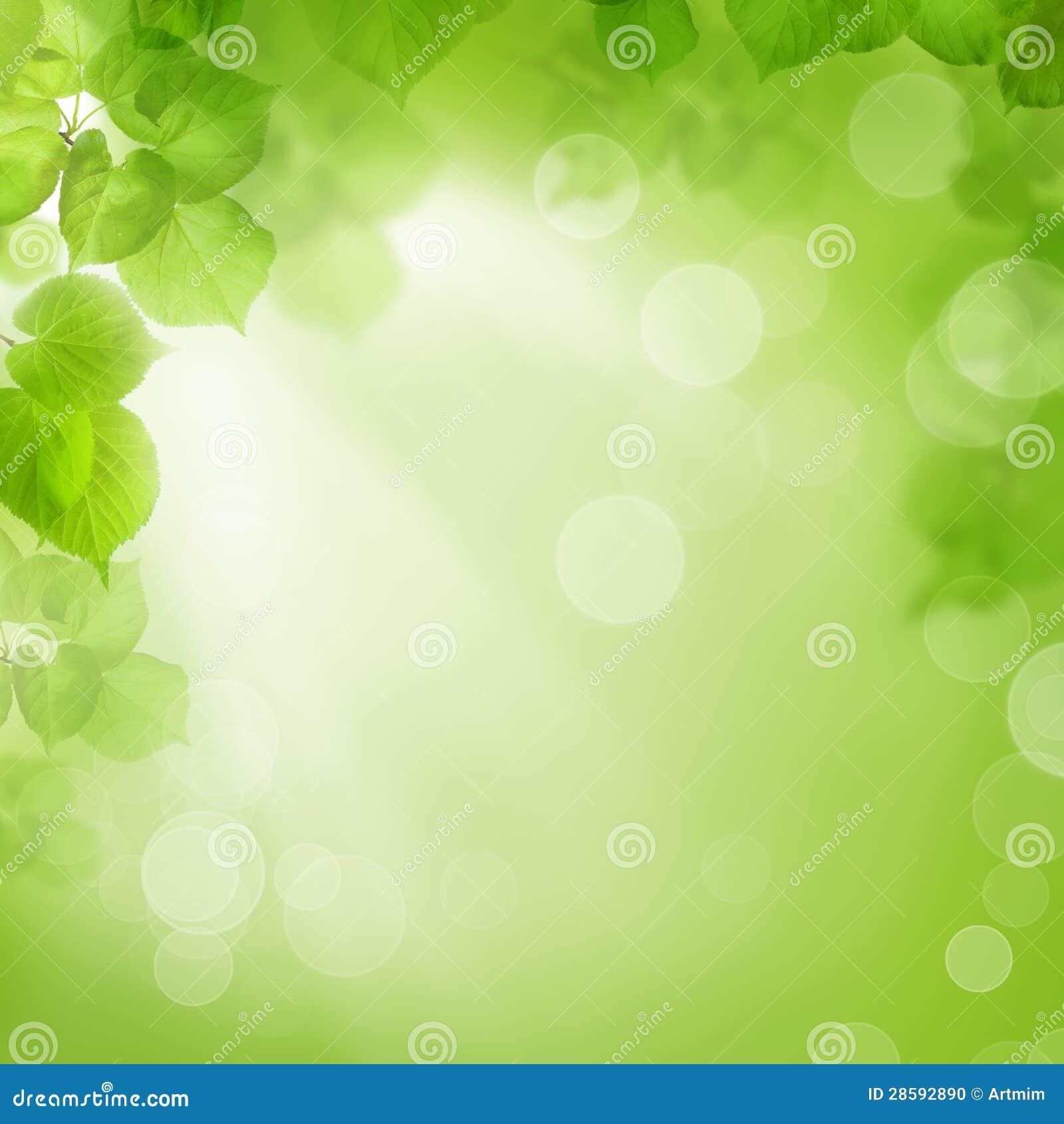 绿色叶子、夏天或者春天背景