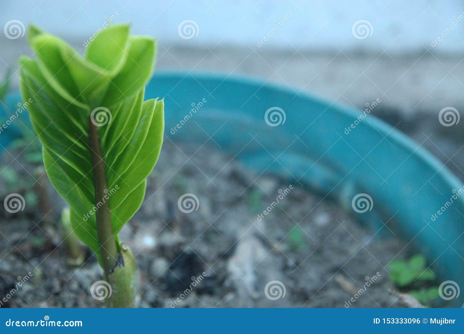 绿色叶子纹理迷离背景