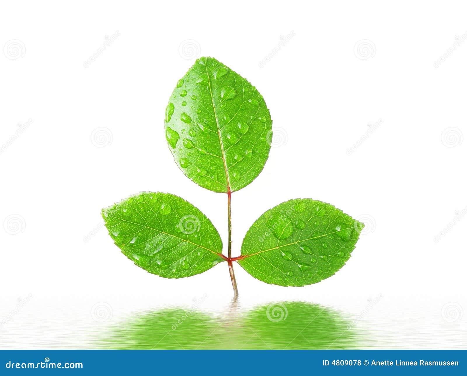 绿色叶子被反射的水