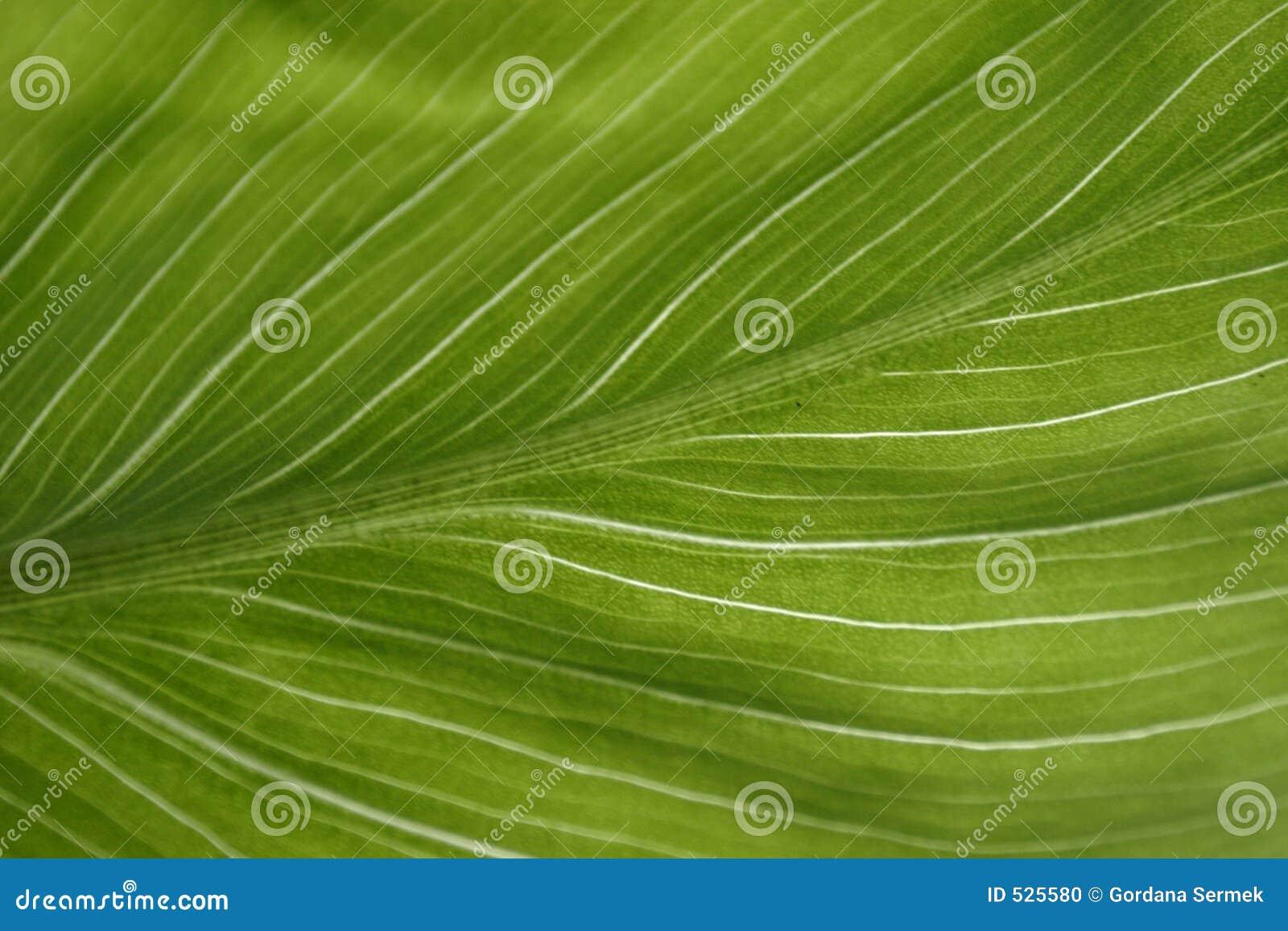 Download 绿色叶子 库存照片. 图片 包括有 绿色, 颜色, 电池, 植物群, 玻色子, 数据条, 五颜六色, 工厂, 有机 - 525580