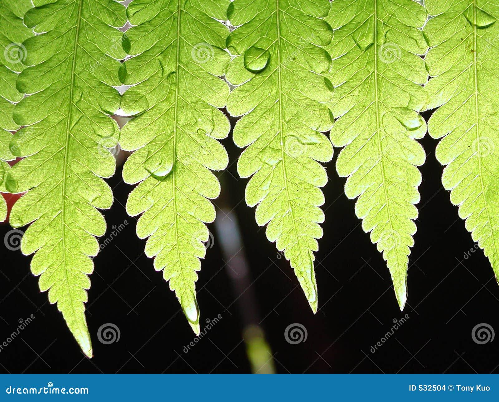 Download 绿色叶子 库存照片. 图片 包括有 玻色子, 植物群, 投反对票, 朽烂, 新鲜, 绿色, 小滴, 分解, 结算 - 532504