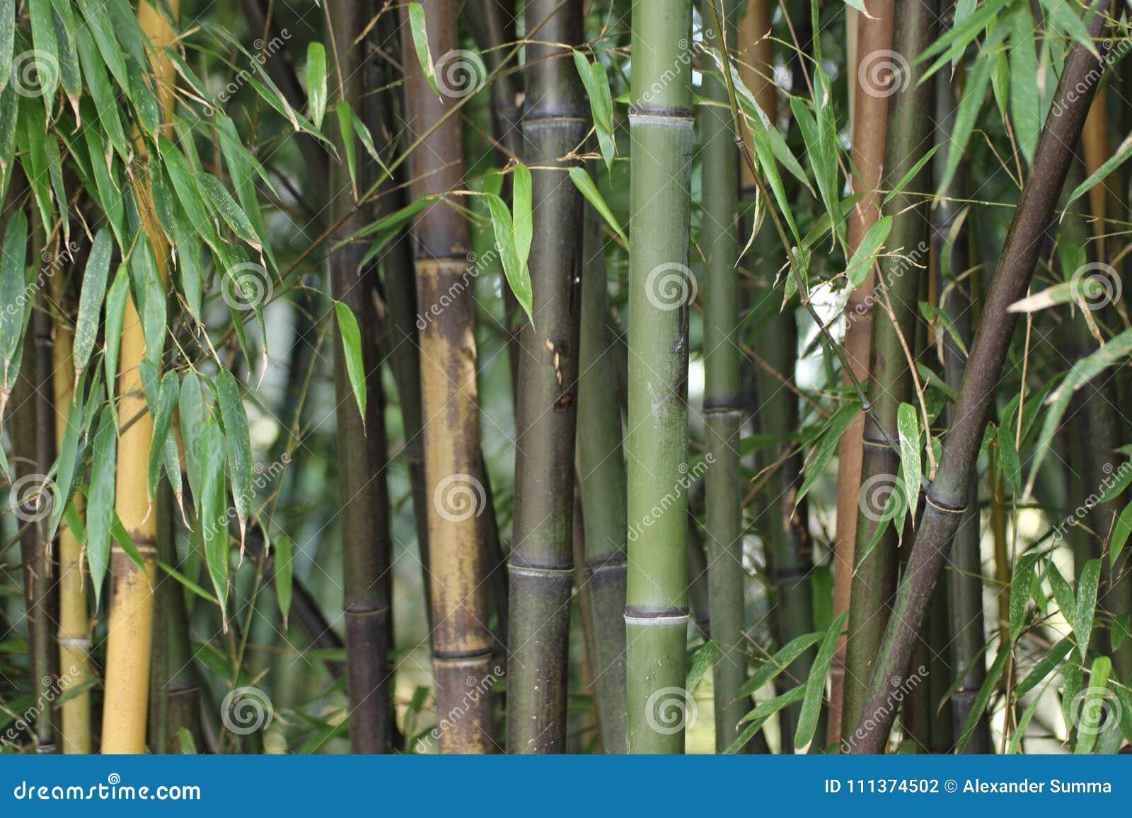 绿色和棕色竹词根特写镜头在冬天
