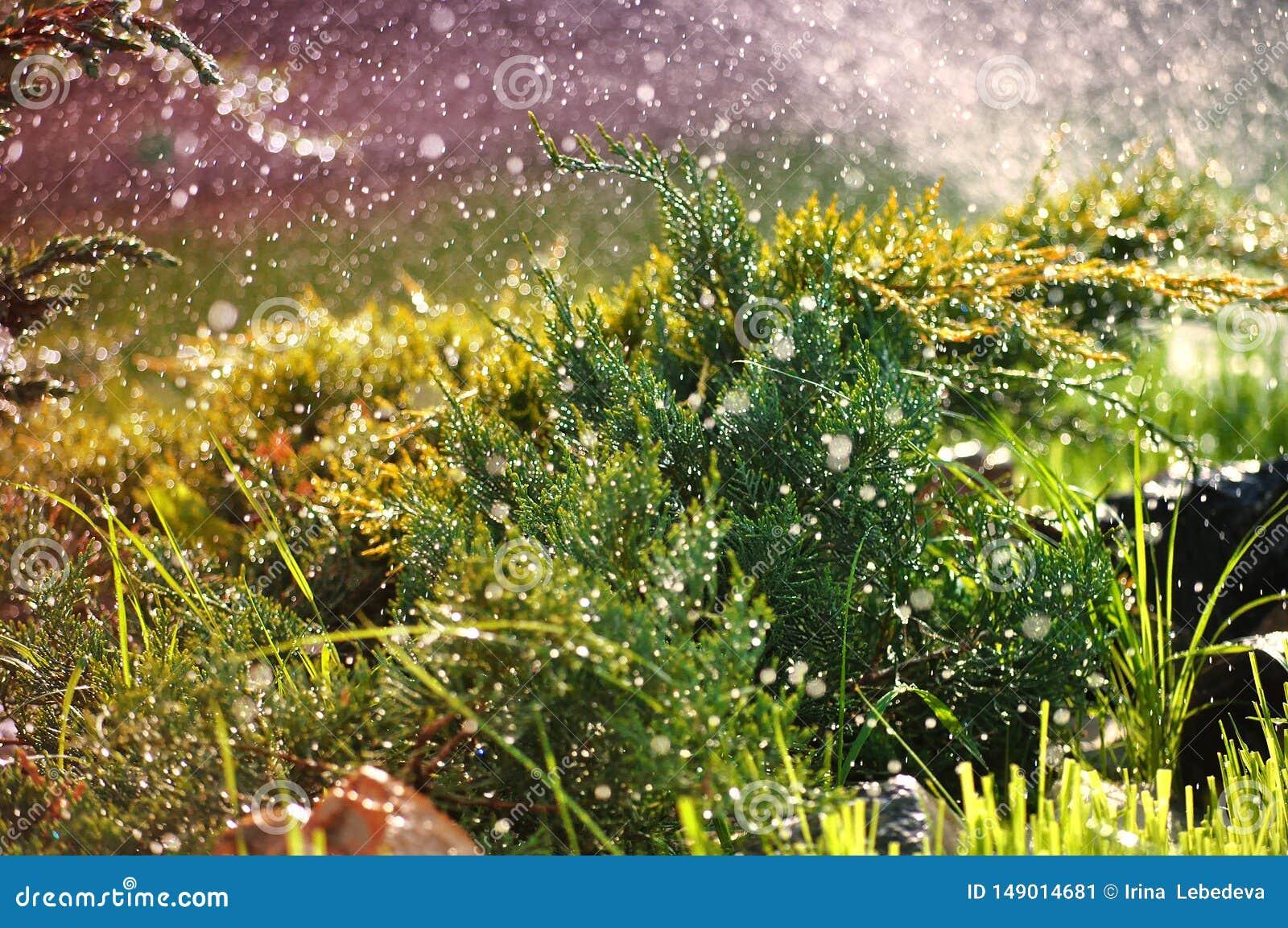 绿色园林植物在夏天雨珠下的庭院里
