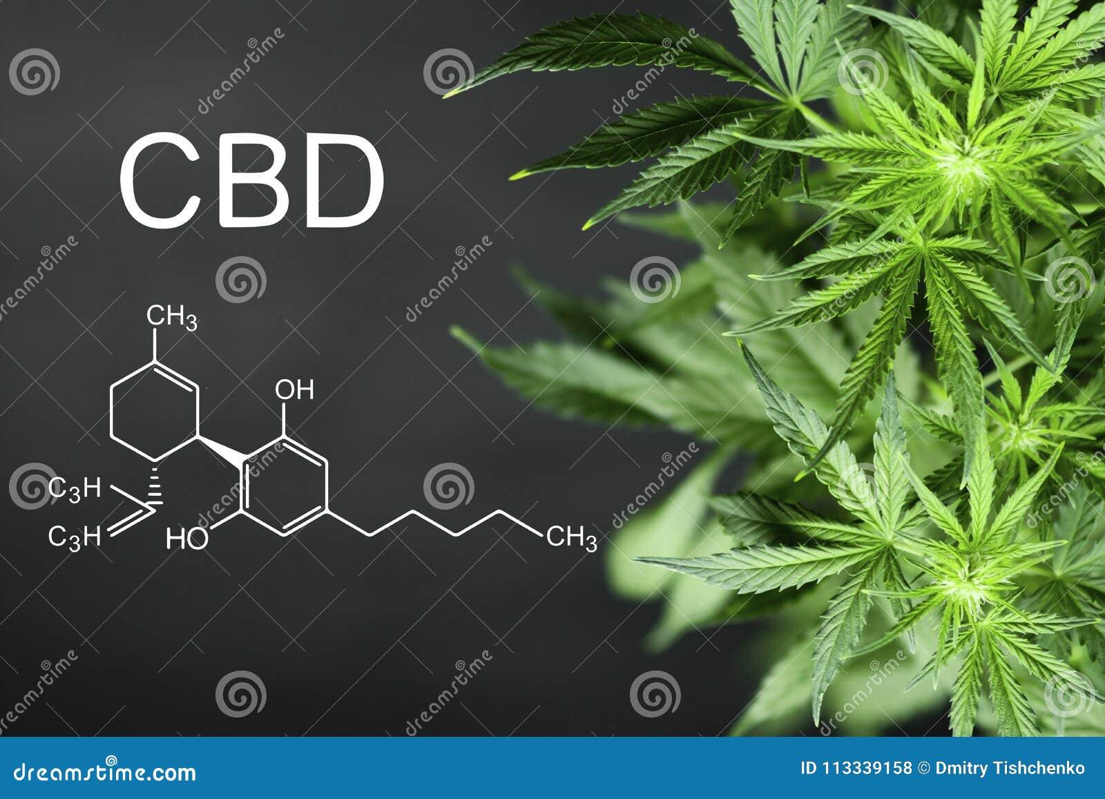 绿色大麻CBN化学式美好的背景开花拷贝空间的A地方