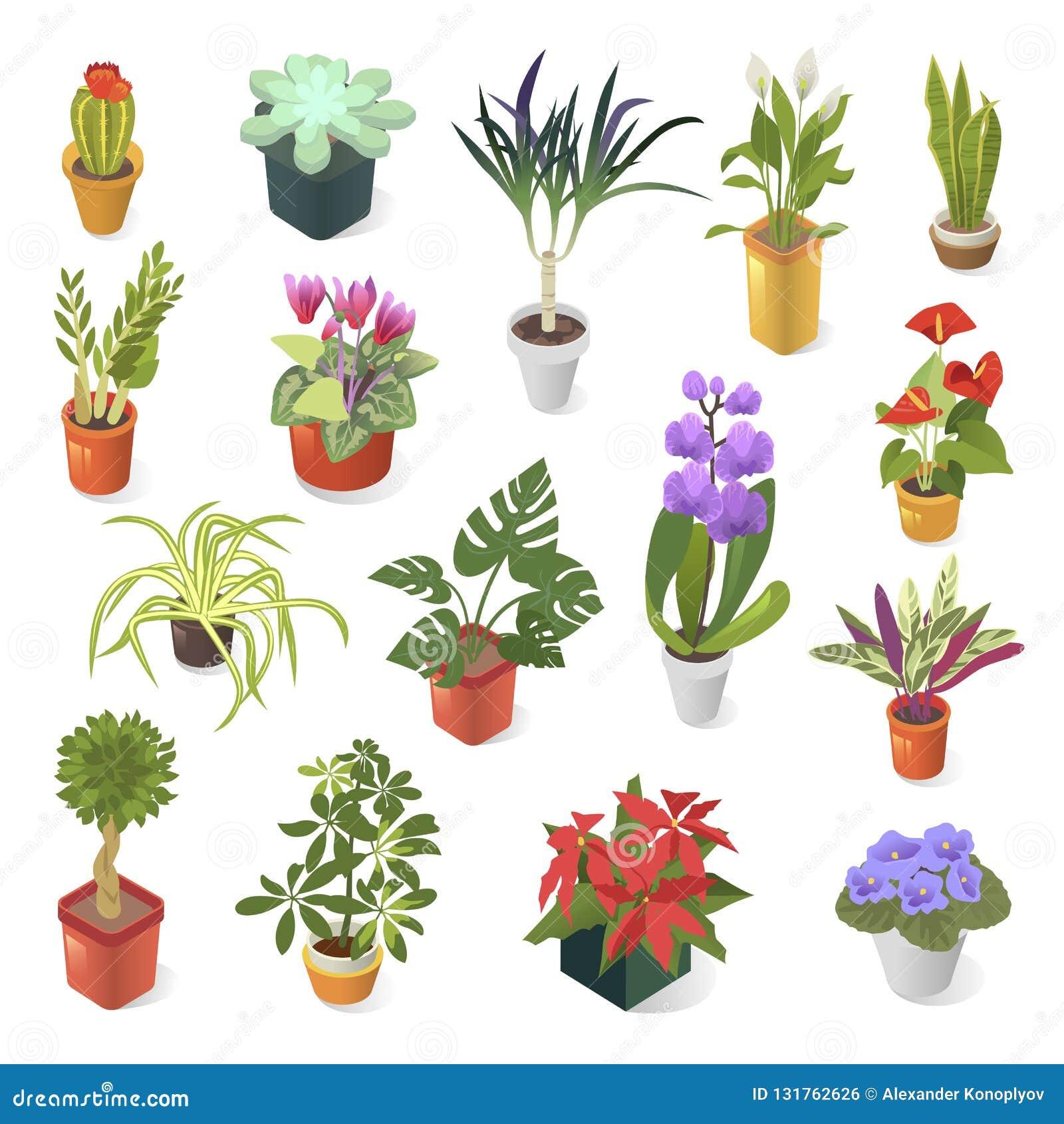 绿色家庭装饰等量象集合的家庭植物