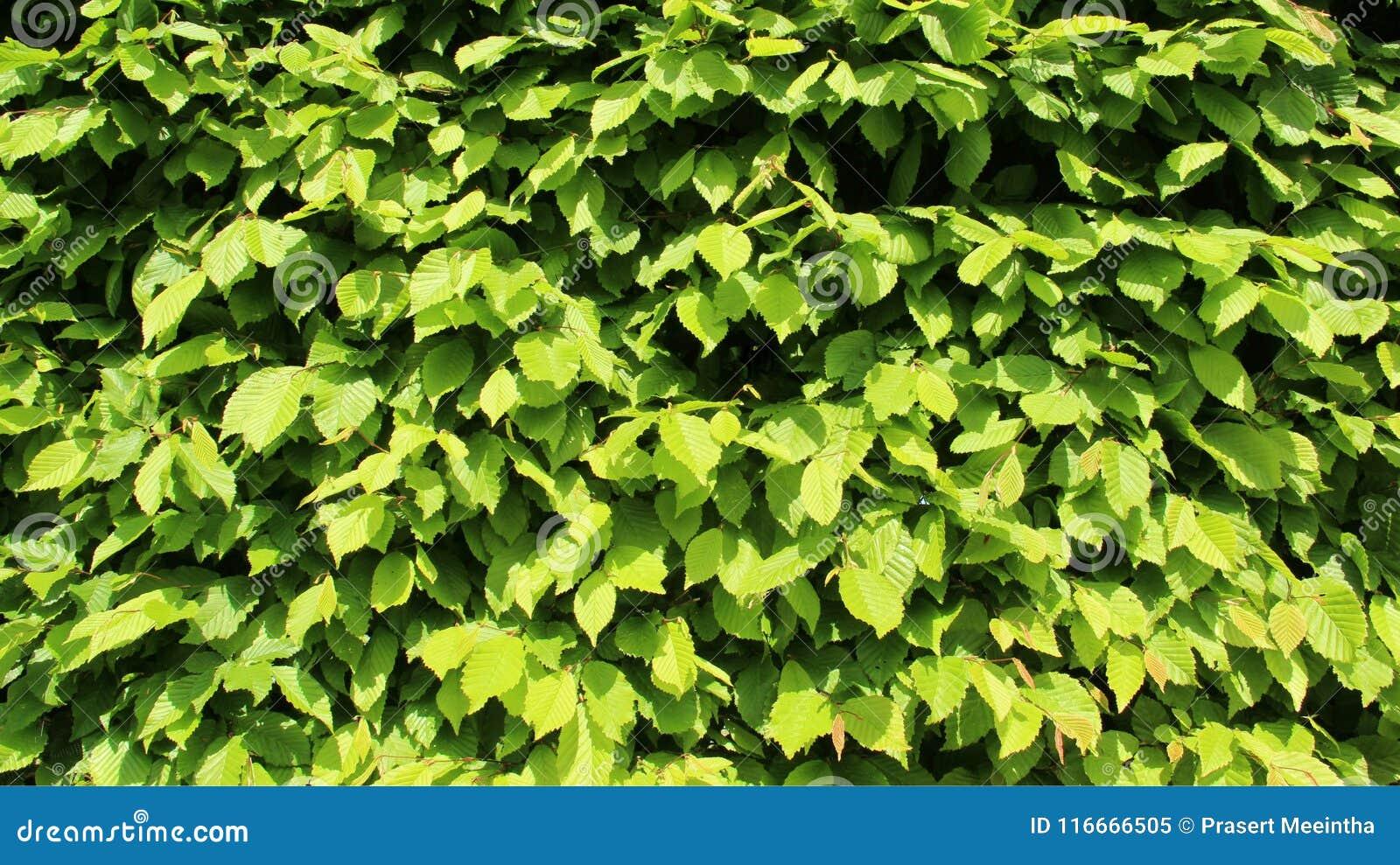 绿色年轻人留下篱芭